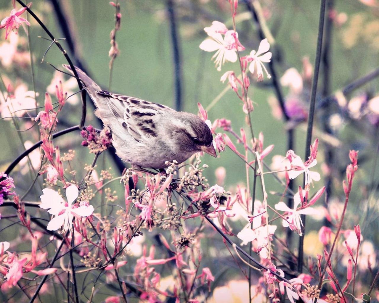 птичка ветка  № 1660327 загрузить