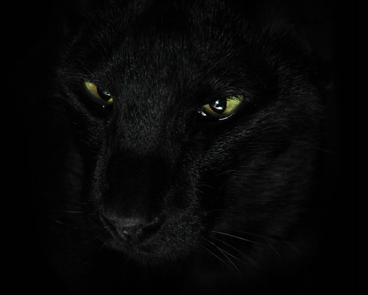 К чему снится дикие кошки