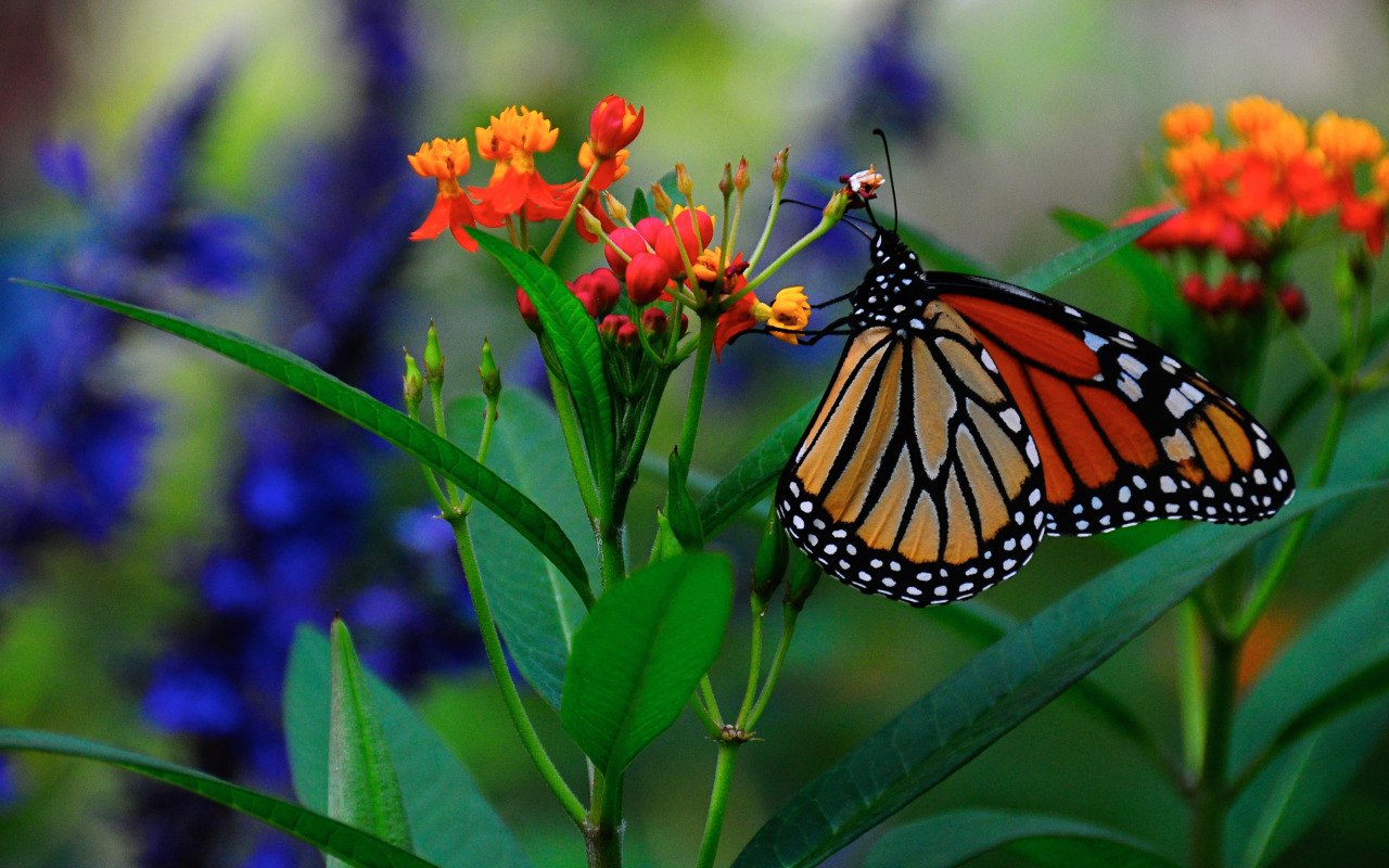 Бабочки растение макро  № 3660356 без смс
