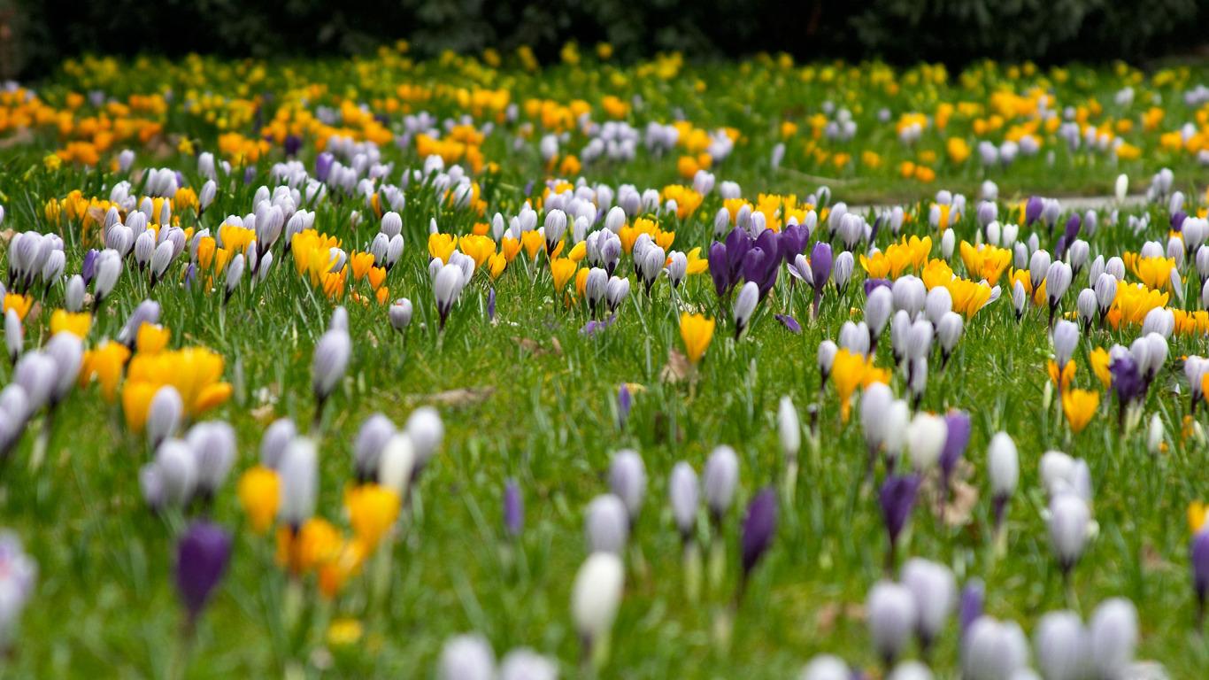 ТОП-7 самых красивых цветущих долин мира фото цветочных 35