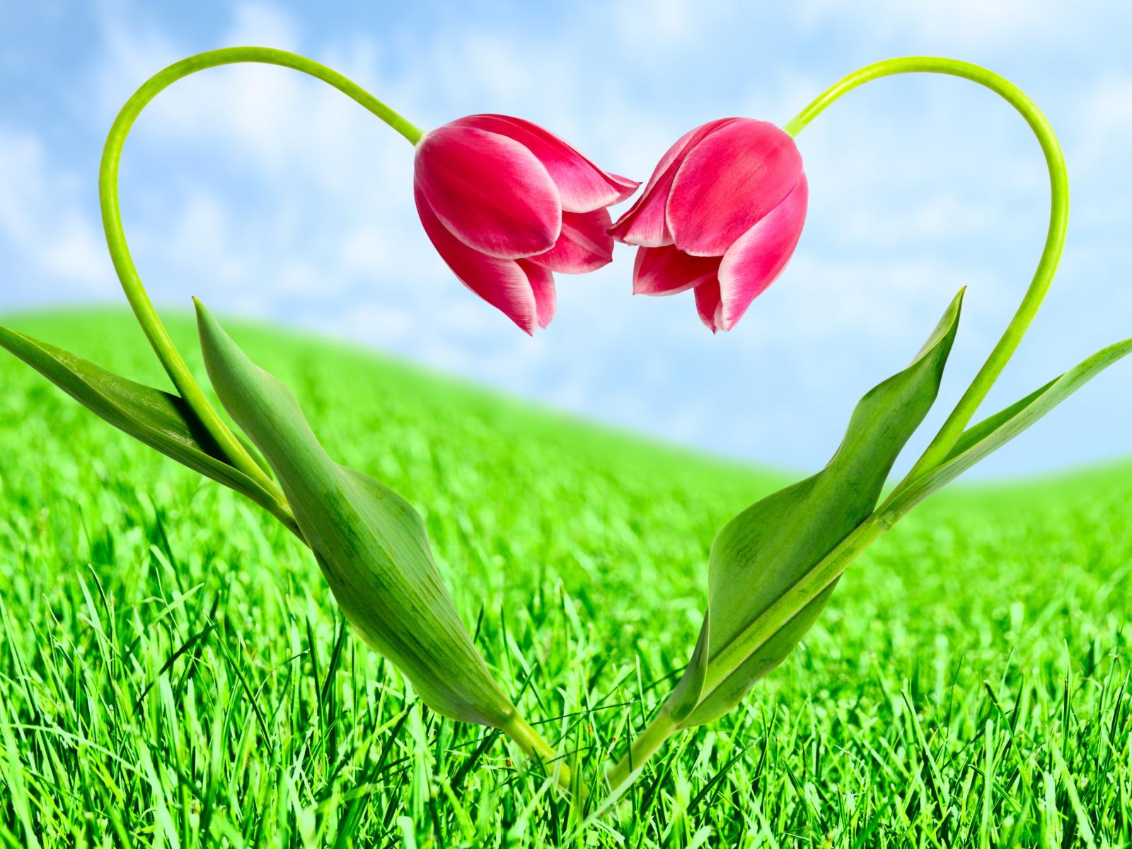 Сердце из зелени  № 1599107 без смс