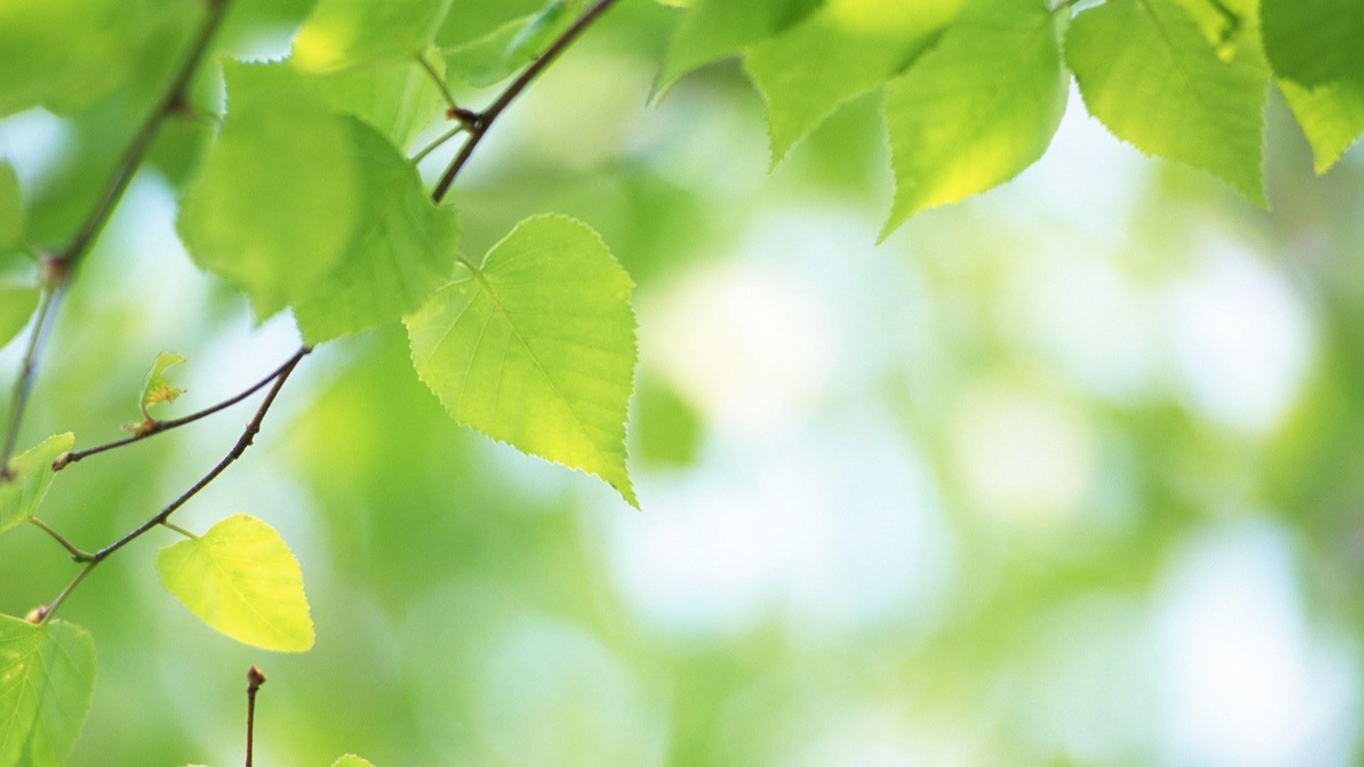Желто-зеленые листки  № 3114877  скачать