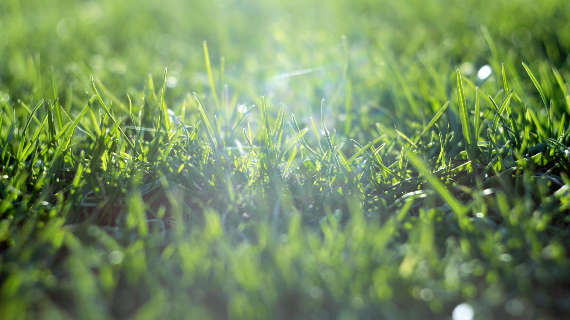 Зеленая, летняя трава  № 1074240 загрузить