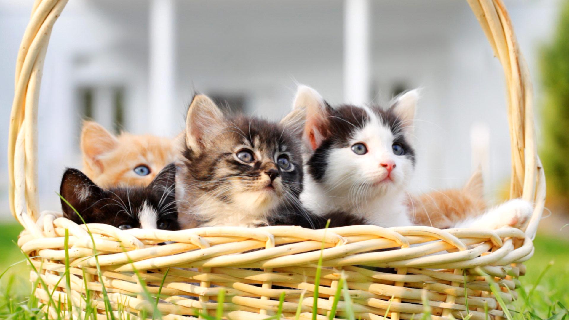 Открыток, картинки кошка с котенком в лукошке