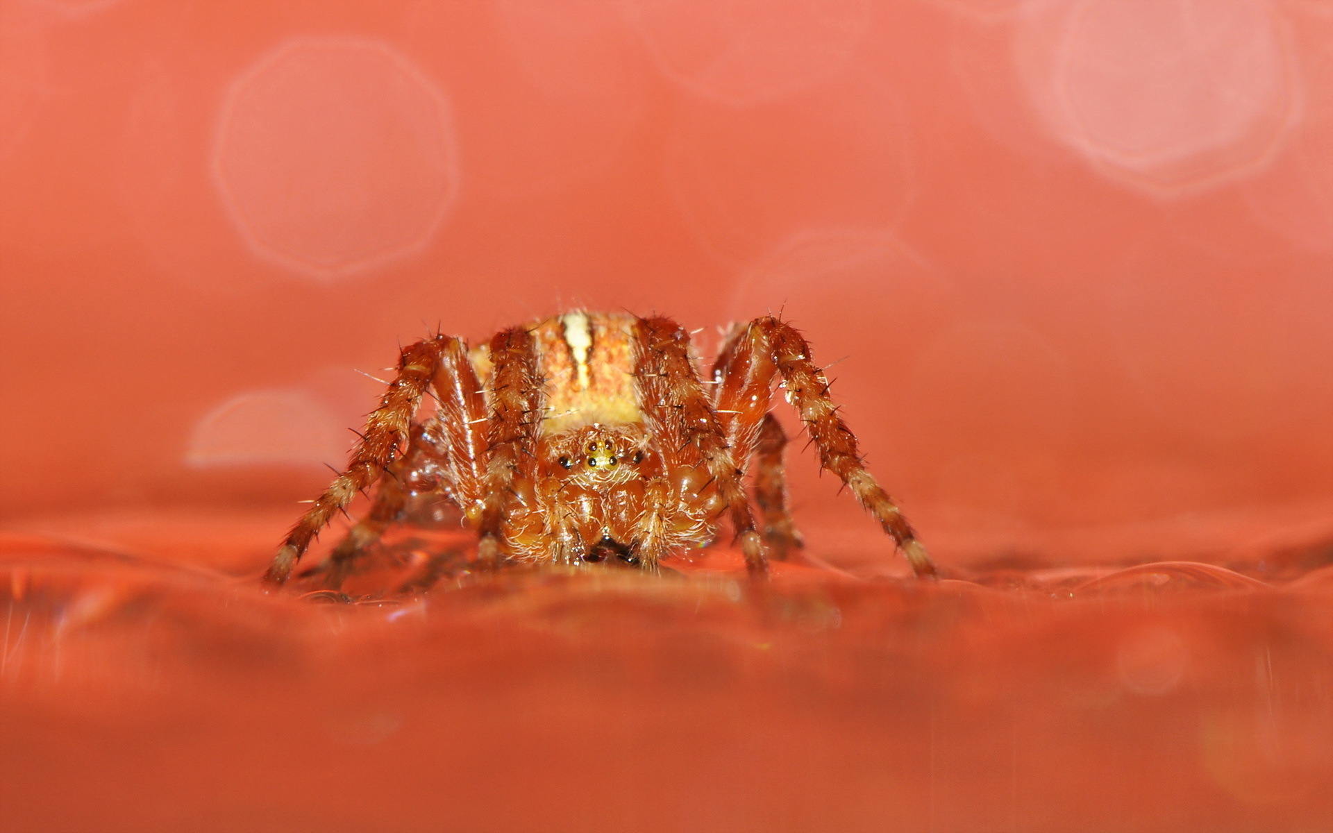 природа животные паук  № 2544274  скачать