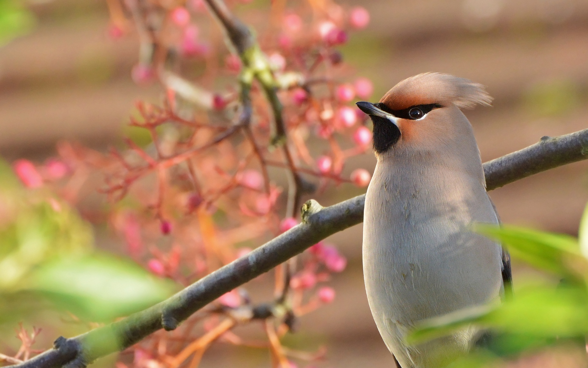 Птицы на ветке  № 1652670 бесплатно