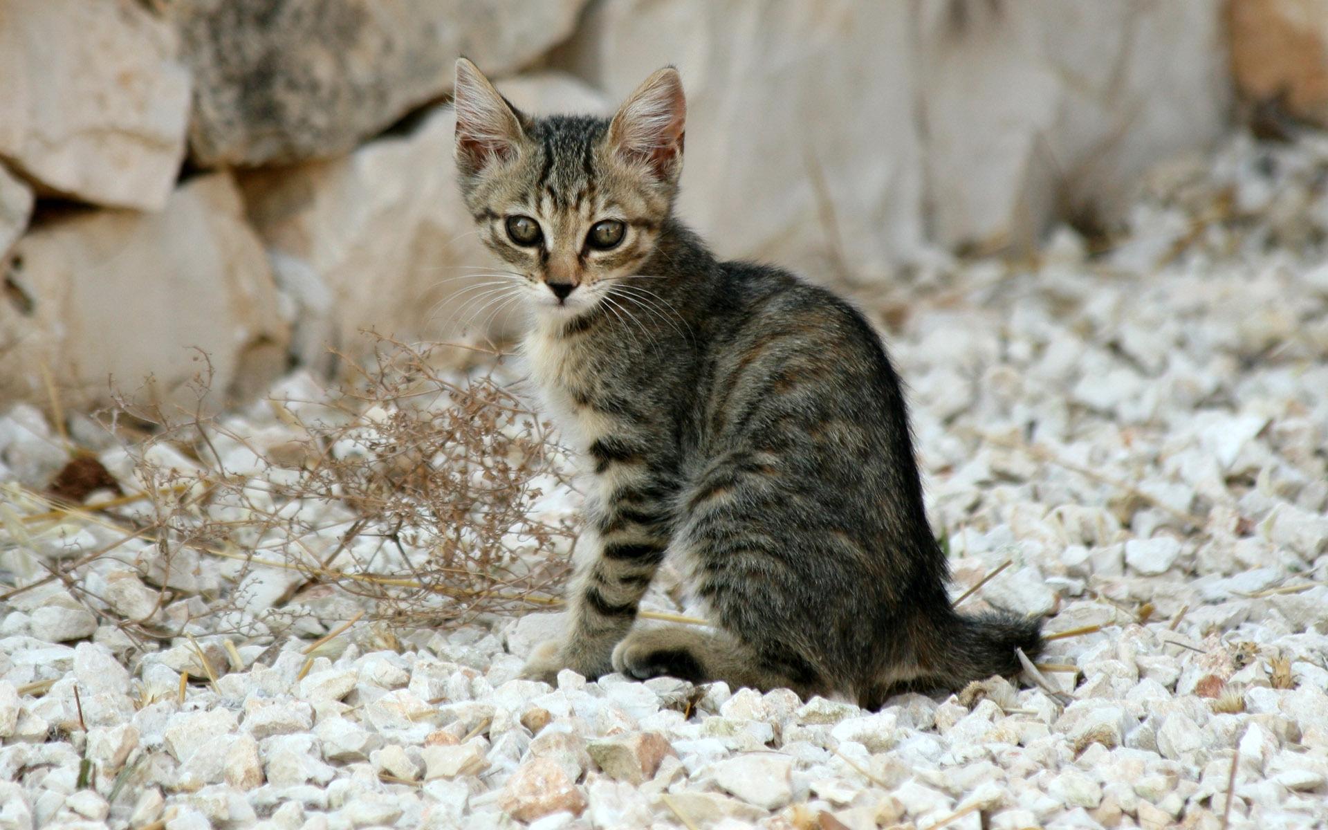 Кот на камушках  № 530524 без смс