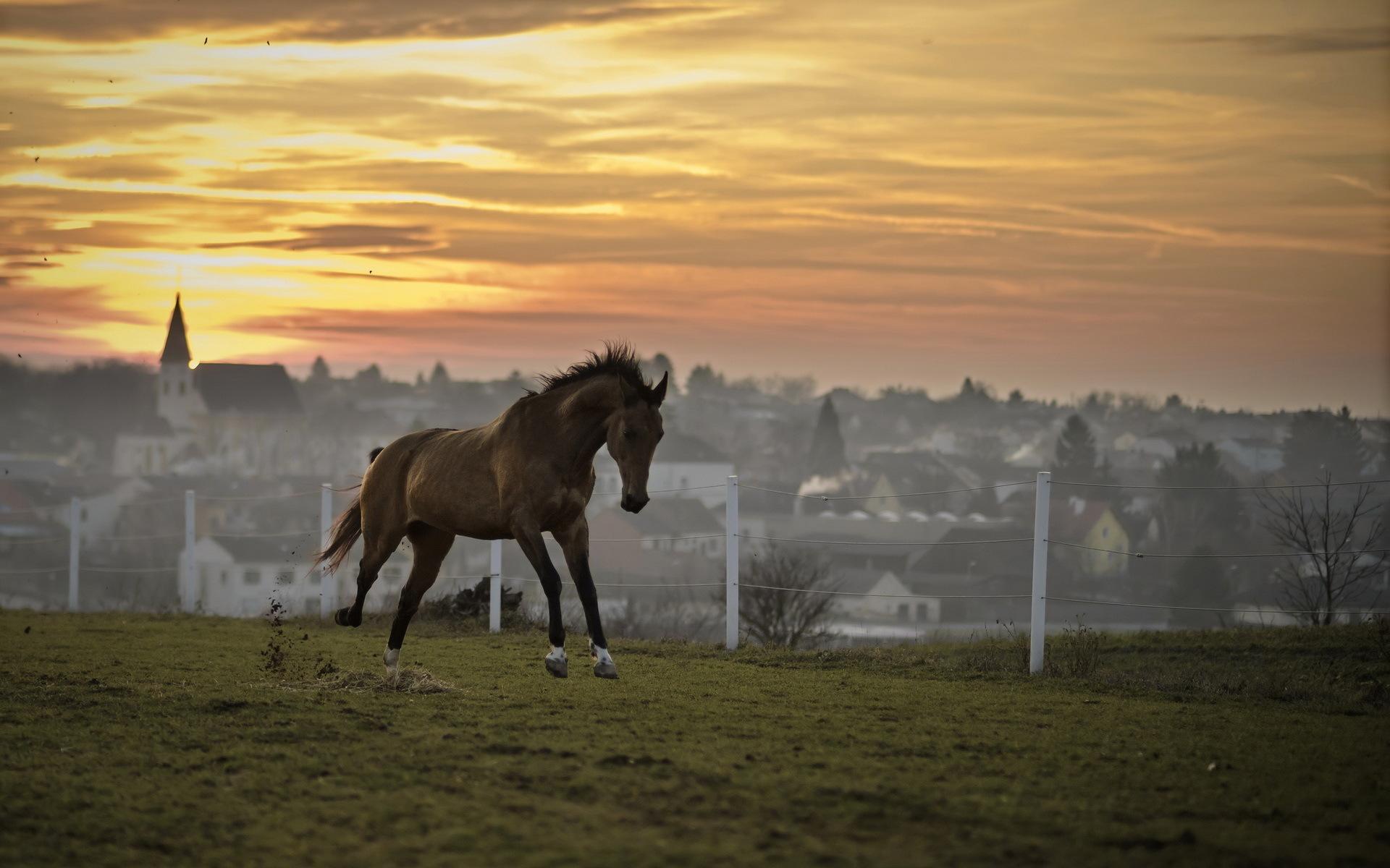 лошадь, трава, закат  № 2659 загрузить