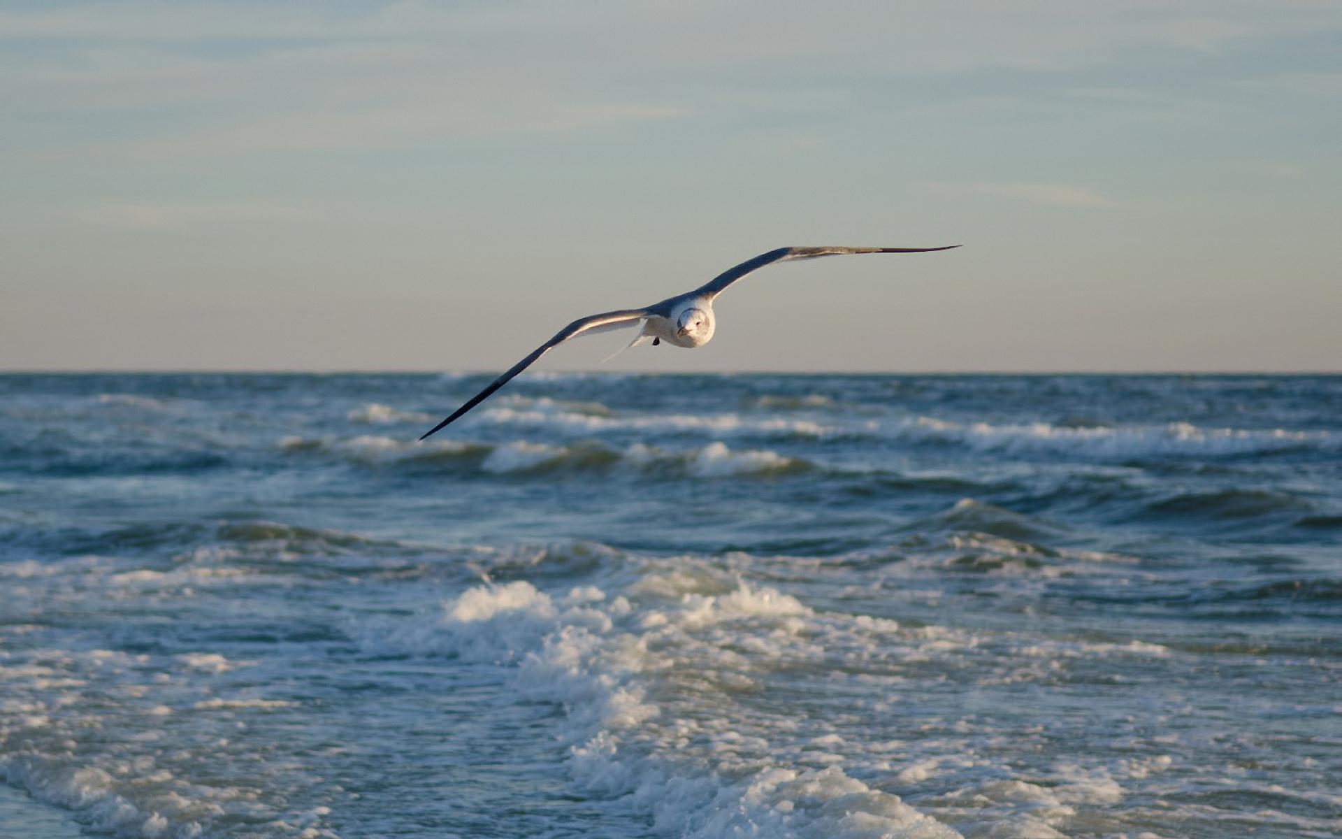 Днем, картинки море волны чайки