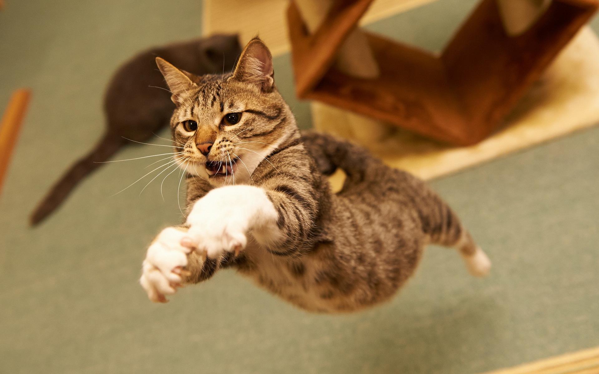 Спортсмену пожелания, картинки самые смешные кошки в мире