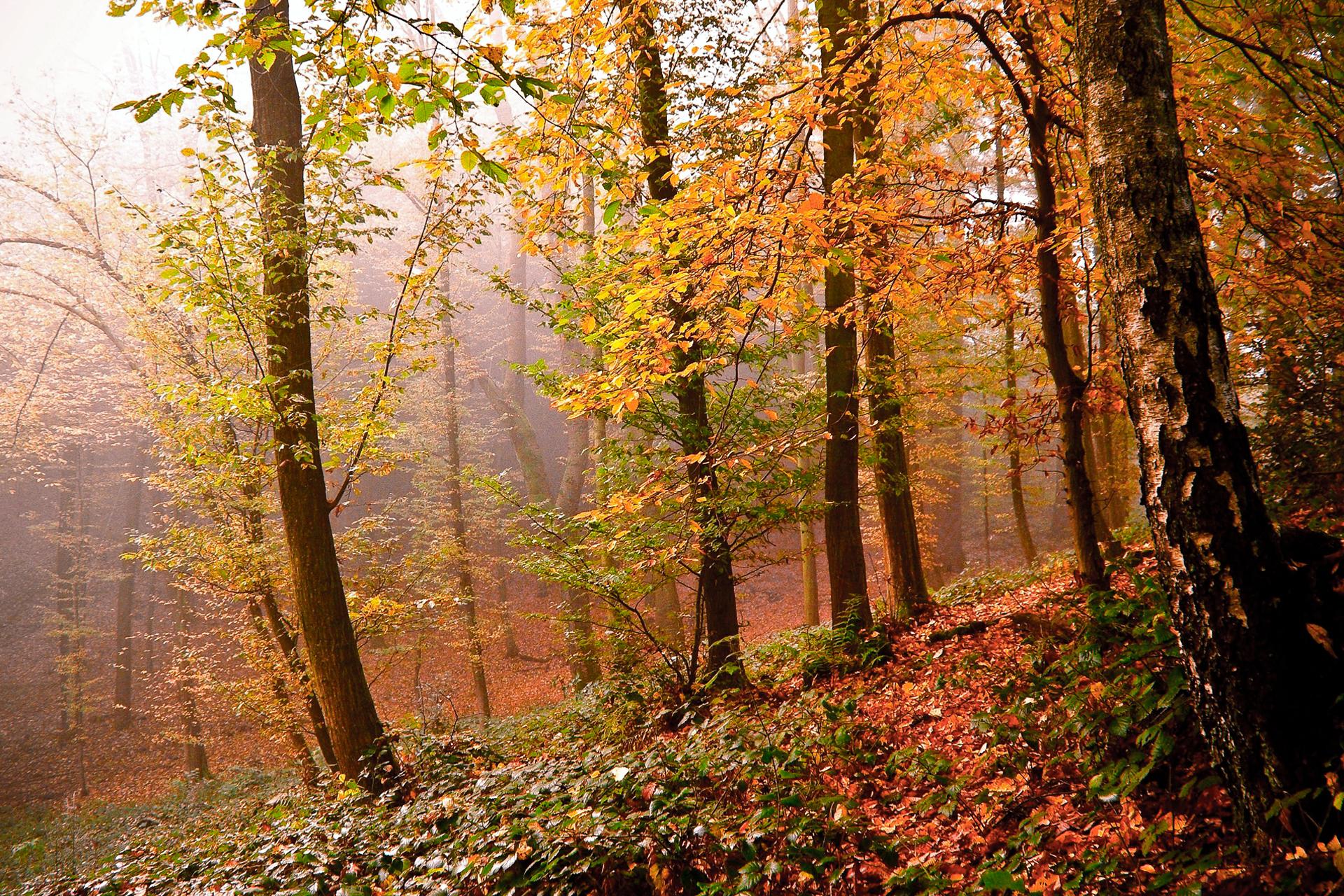 красивые картинки леса осеннего объявление такое