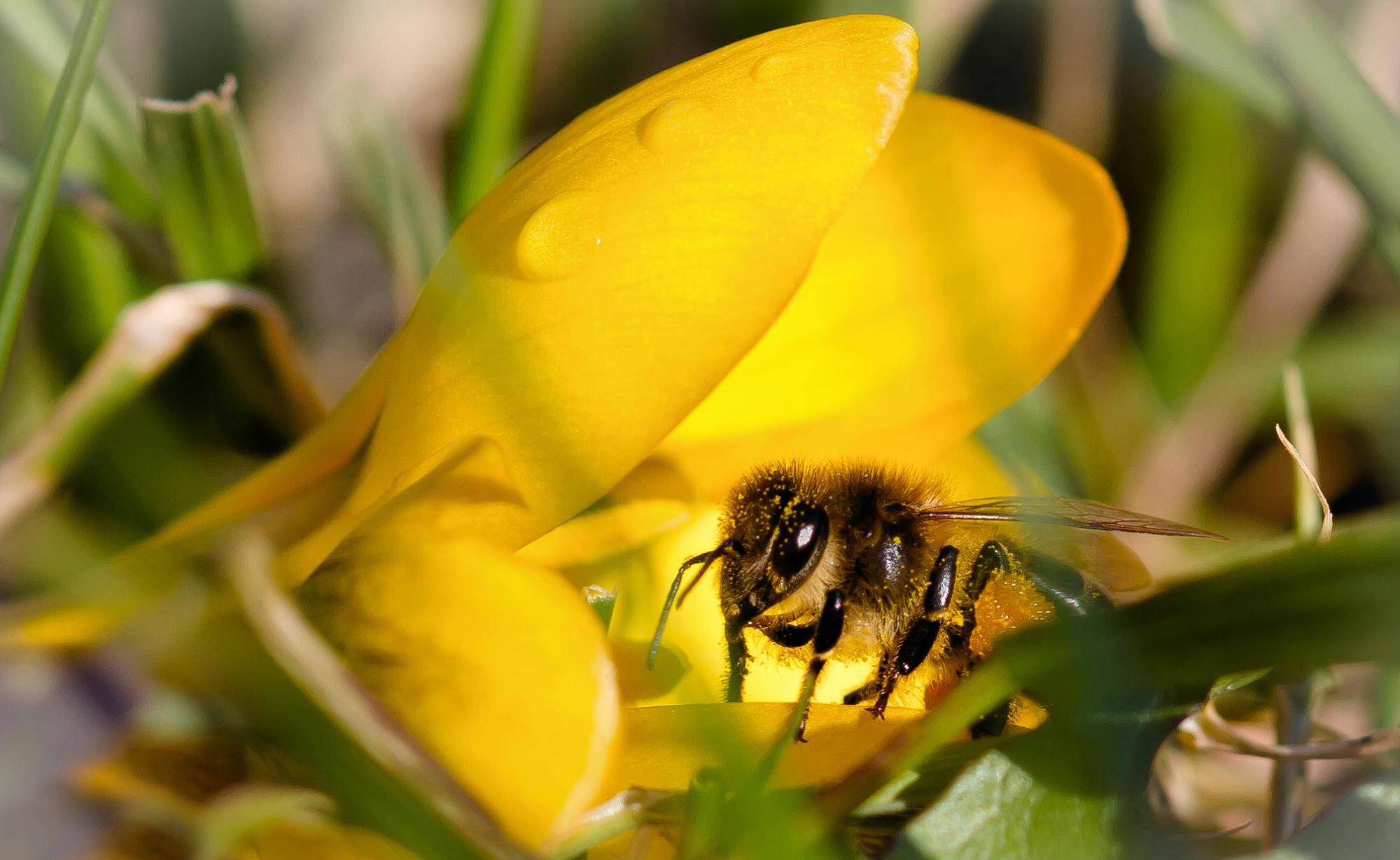 это обои и картинки пчелка элементов