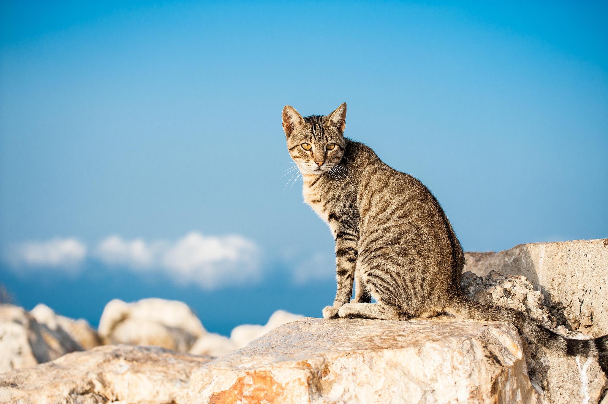 Кот на камушках  № 530460 загрузить