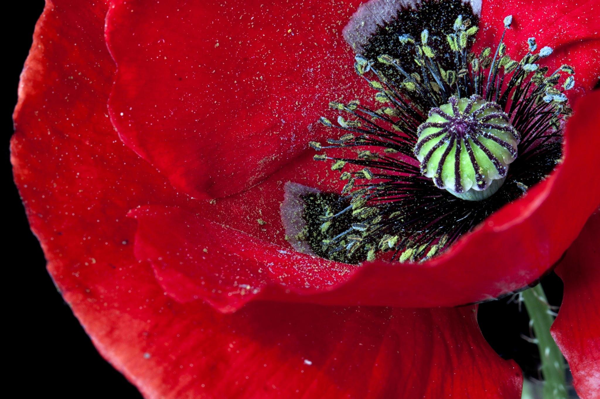 макро цветок пестик  № 3231650  скачать