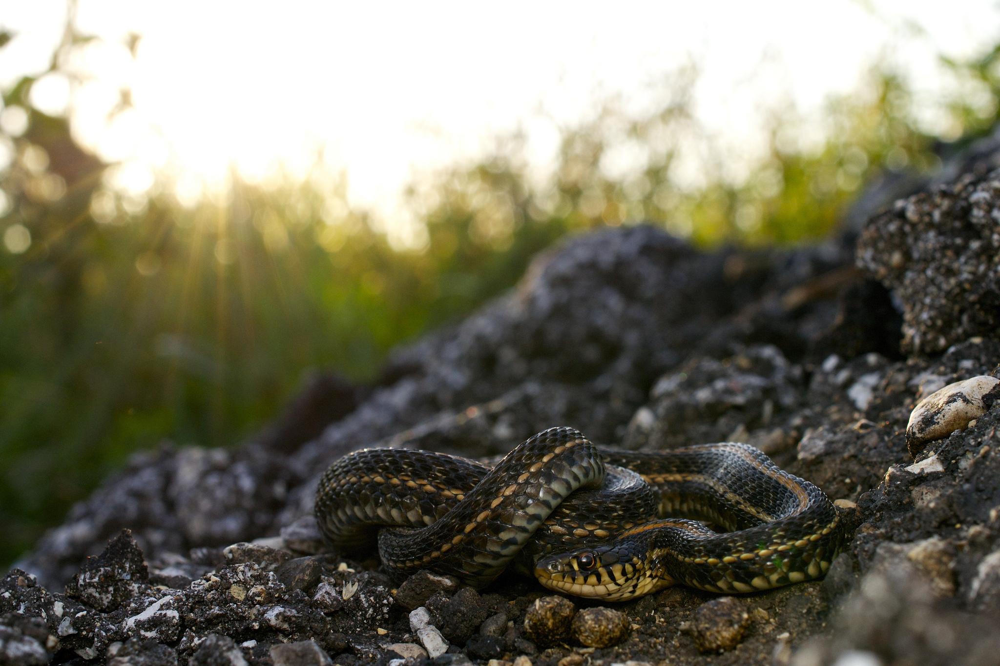 ведущая программы фото змей в природе лежали своеобразной