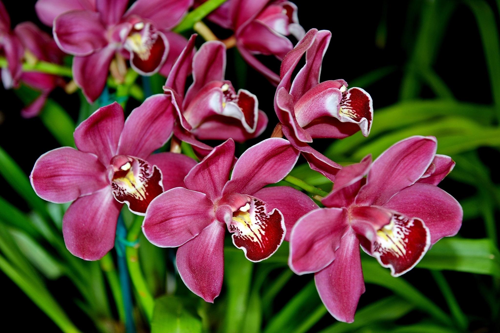 Рабочий стол, картинки цветы красивые орхидеи
