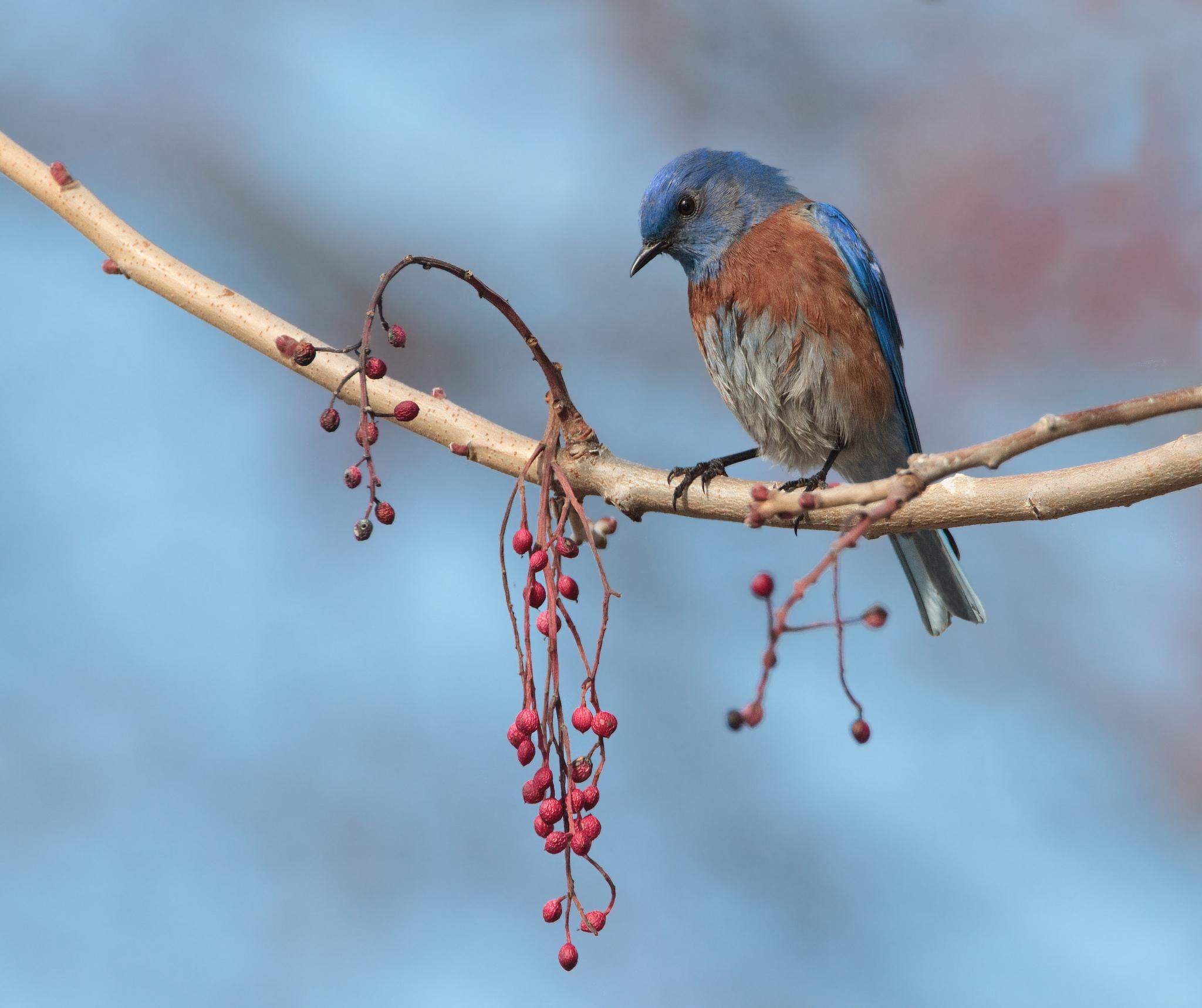 Птицы на ветке  № 1652610 загрузить