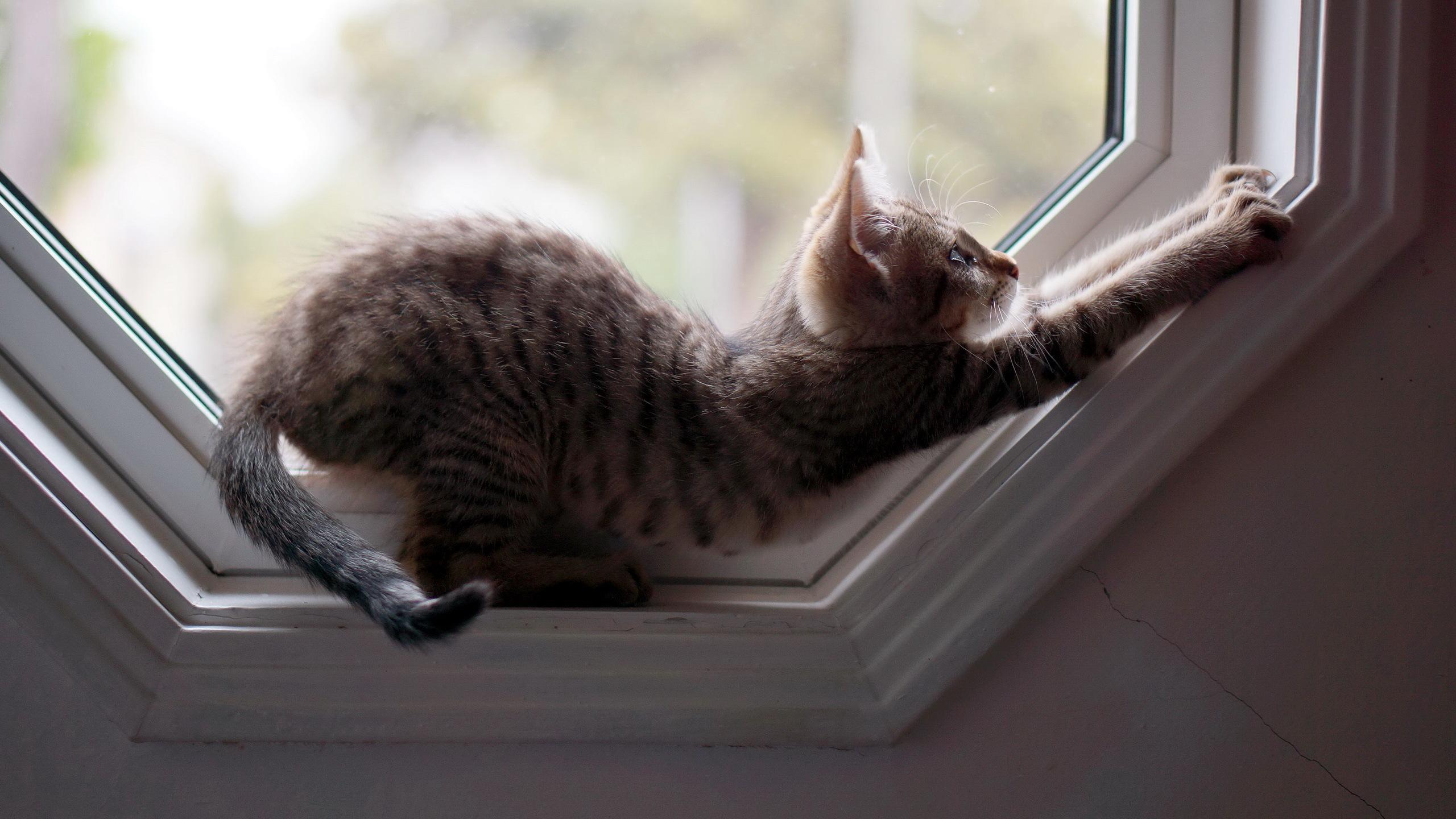 котята на окне kittens on the window  № 3063282 бесплатно