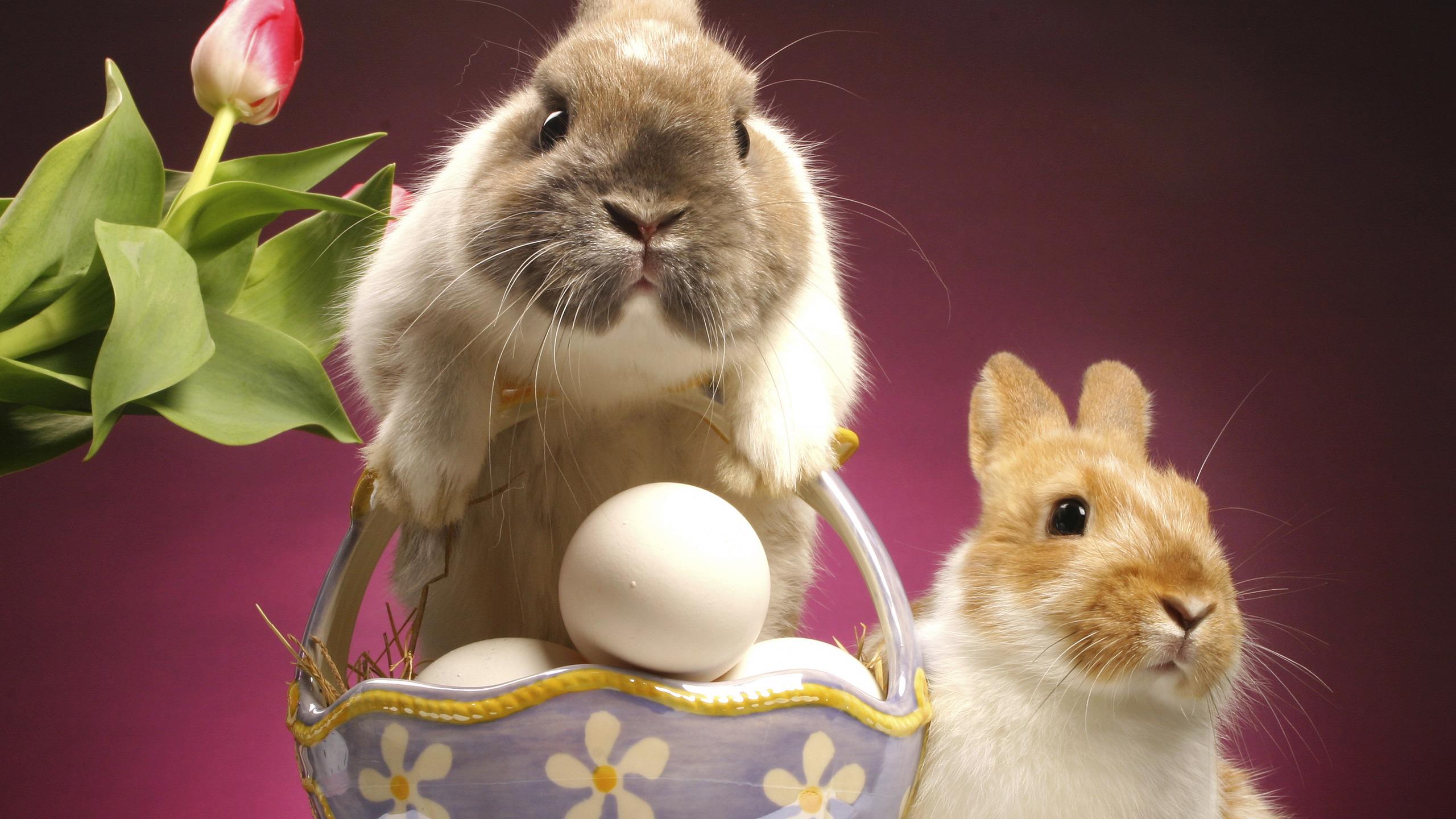кролик с тюльпанами  № 1144611 бесплатно