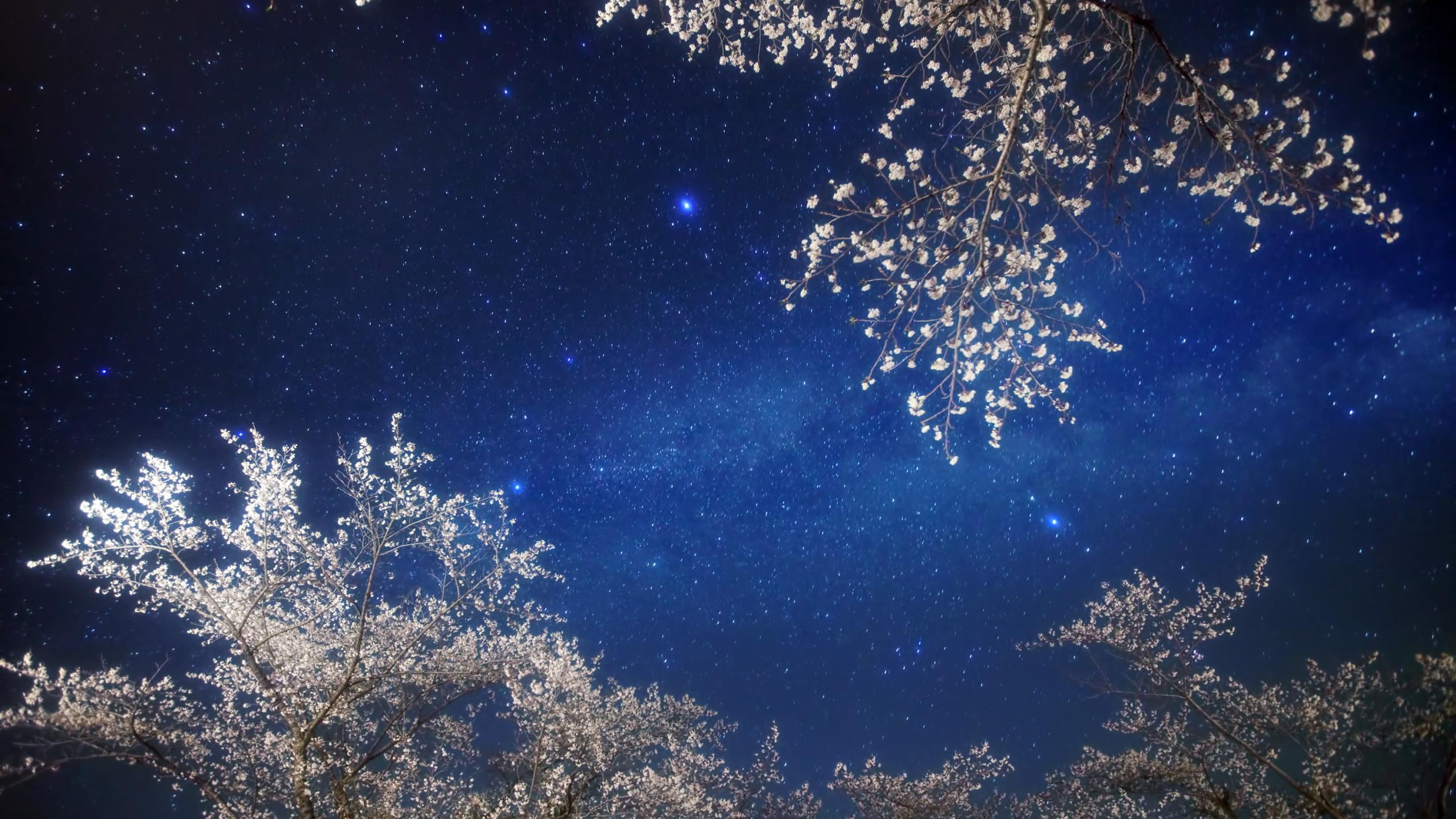 вишневая bmw под звездным небом  № 2384150  скачать