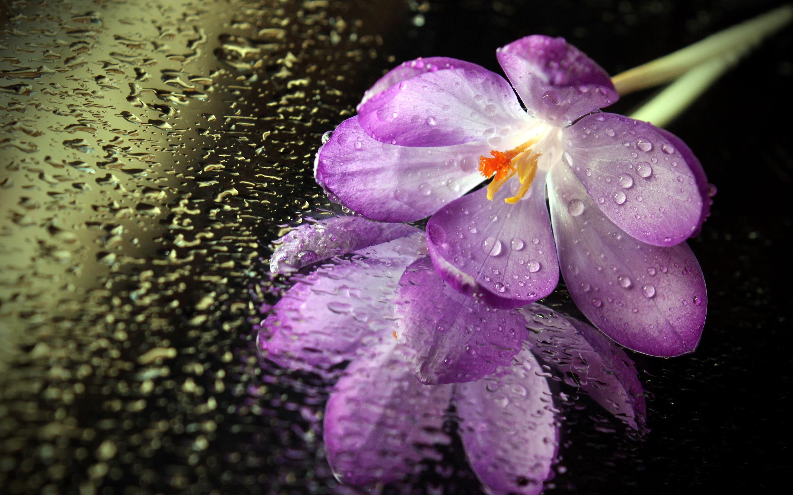 обои на раб стол цветы вода № 635536 загрузить