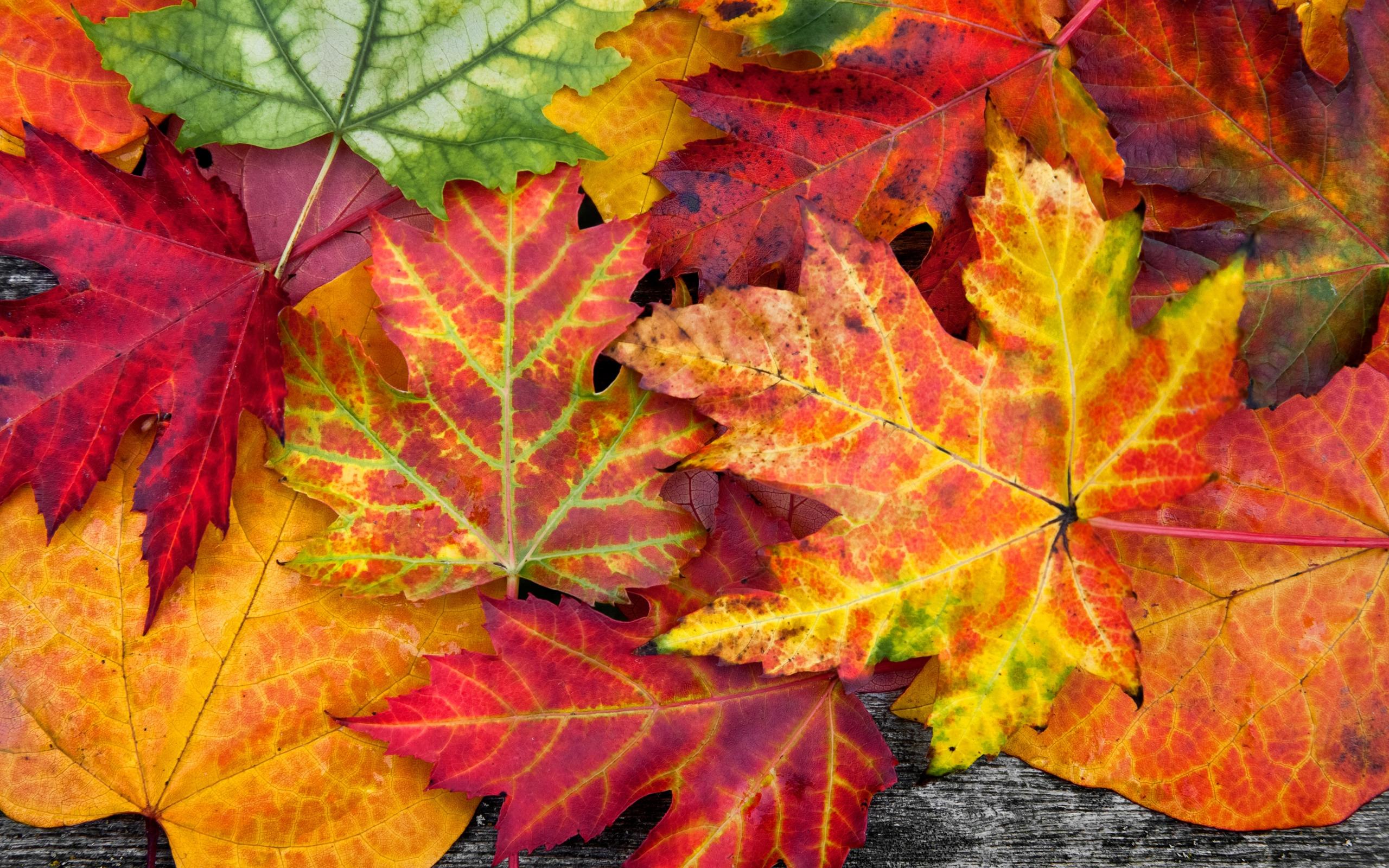 фото листьев осенних