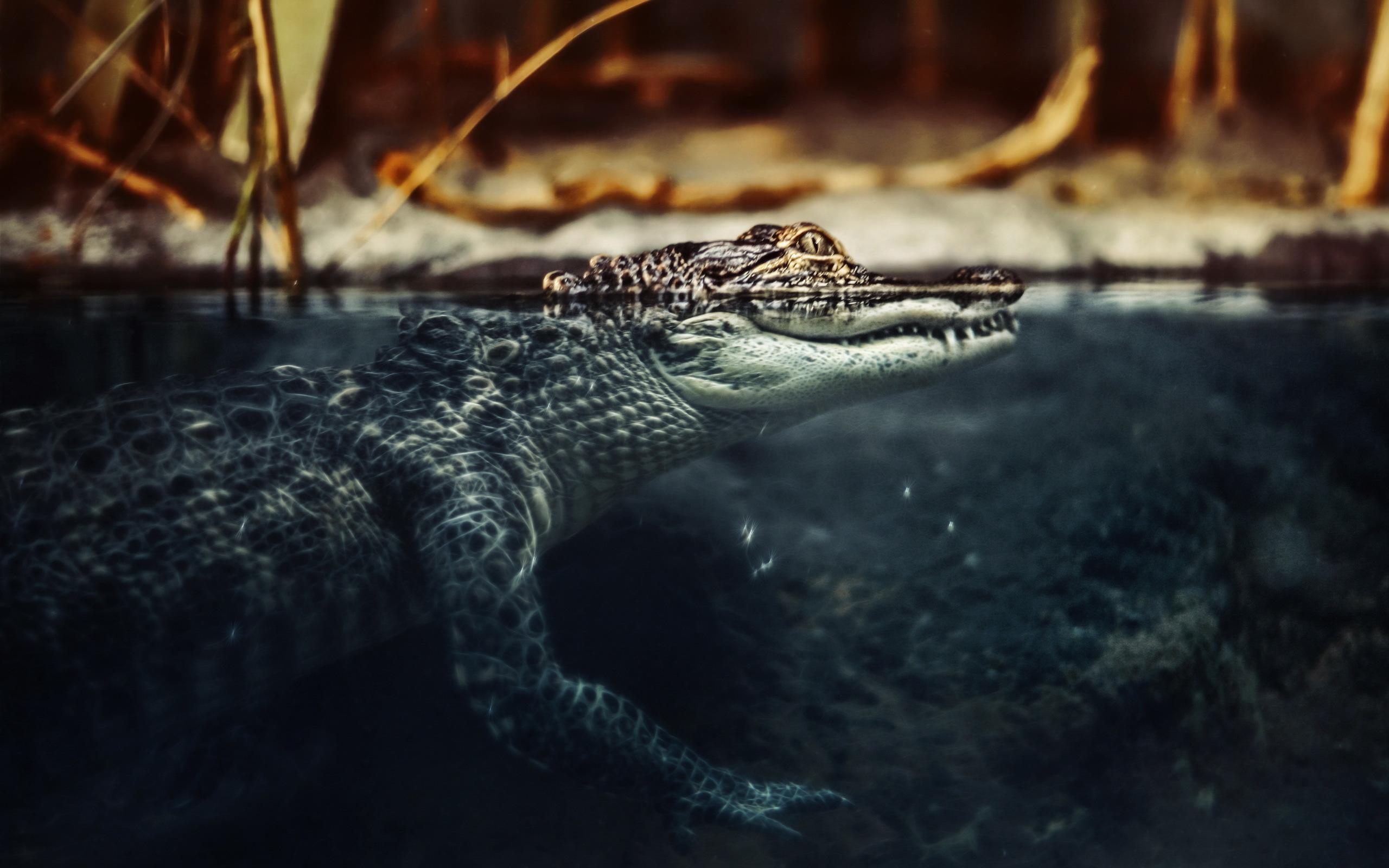 Маленький аллигатор  № 1381877  скачать