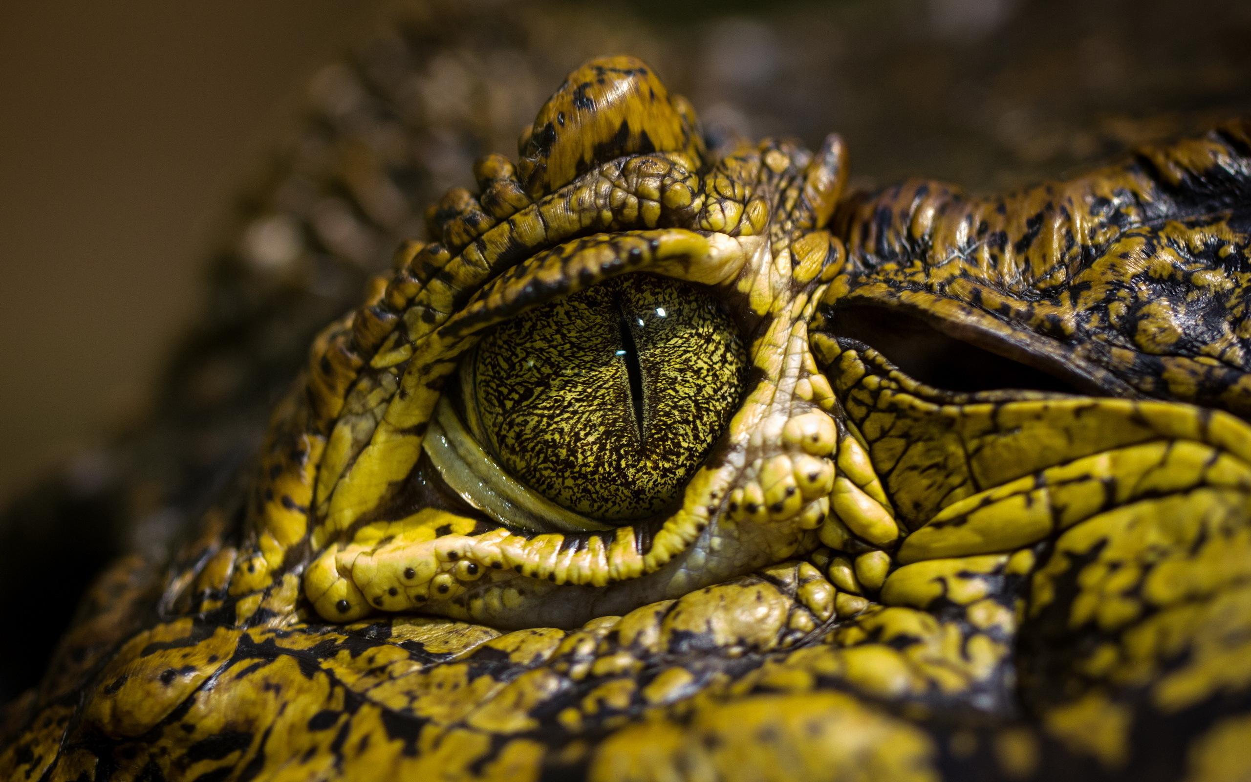 природа животные рептилия  № 234943  скачать