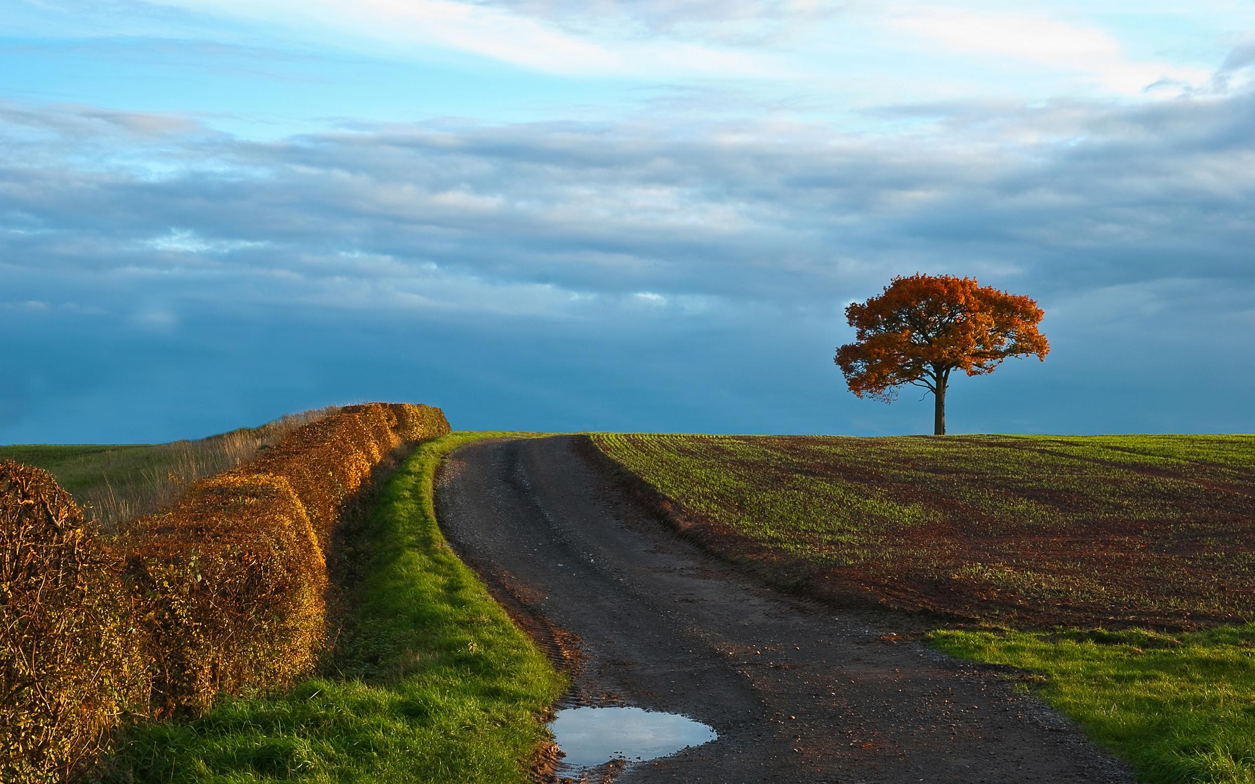 дерево дорога tree road  № 2404900 бесплатно