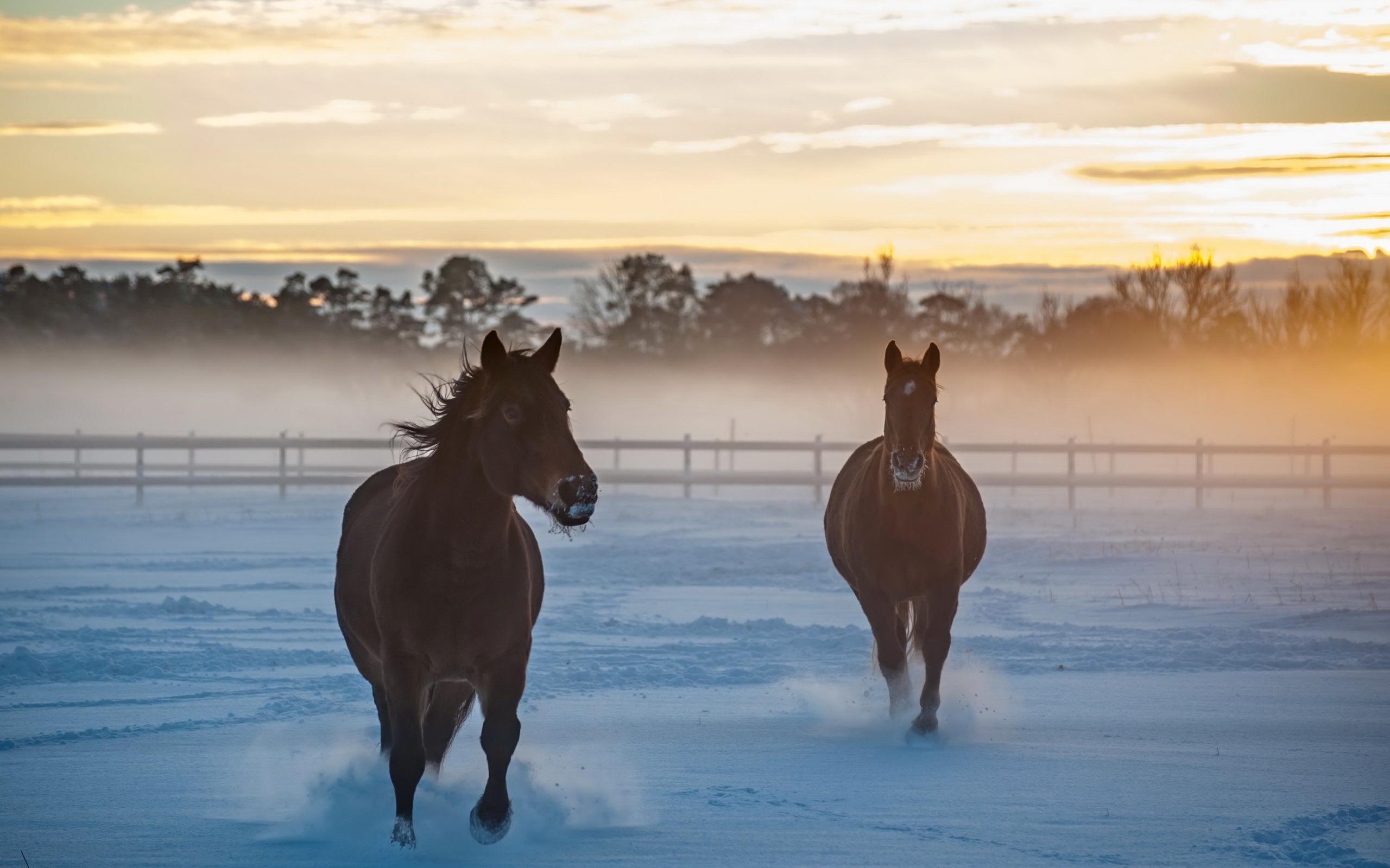 обои для рабочего стола зимние лошади № 465219 бесплатно