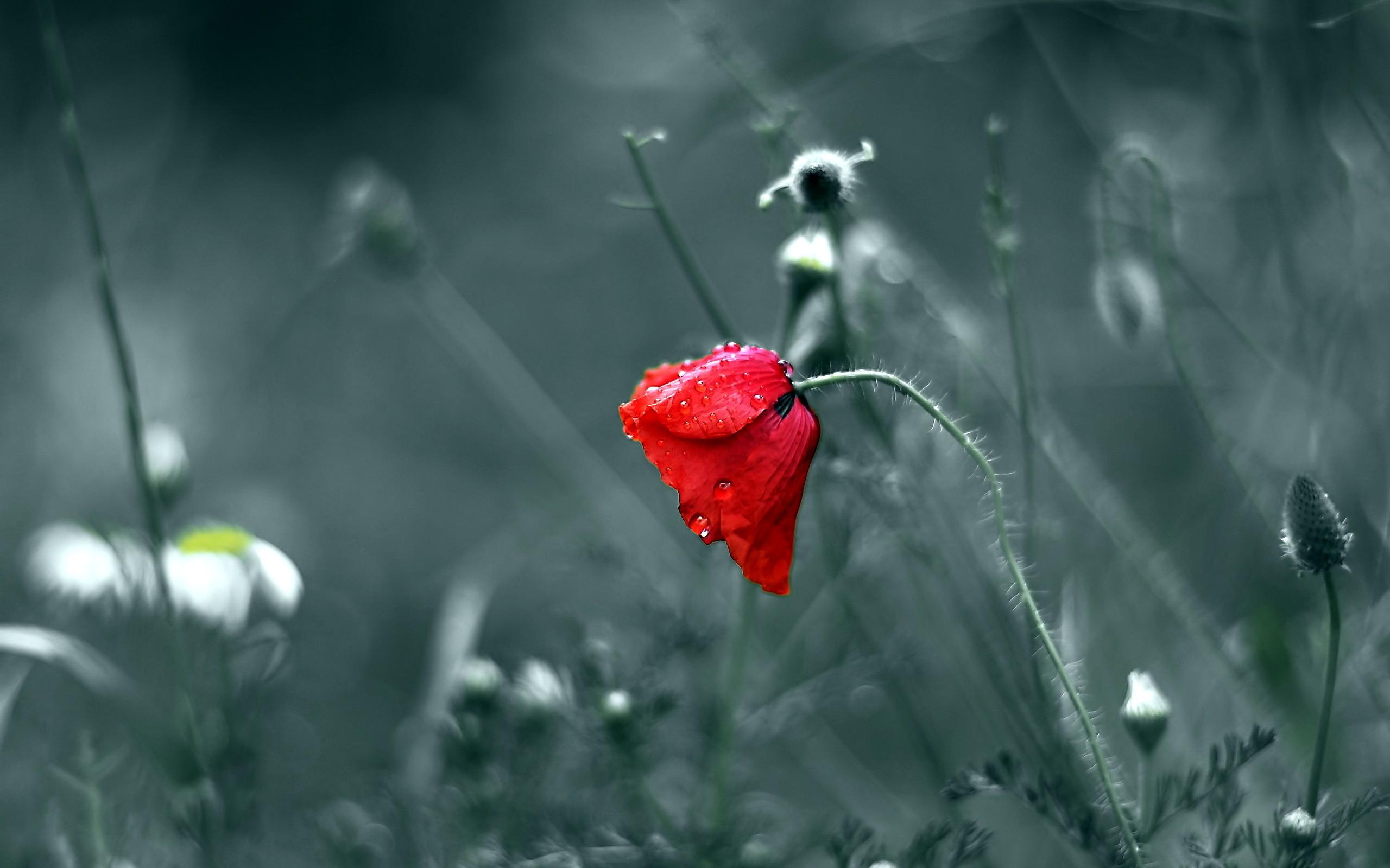 грустные цветы фото мнению