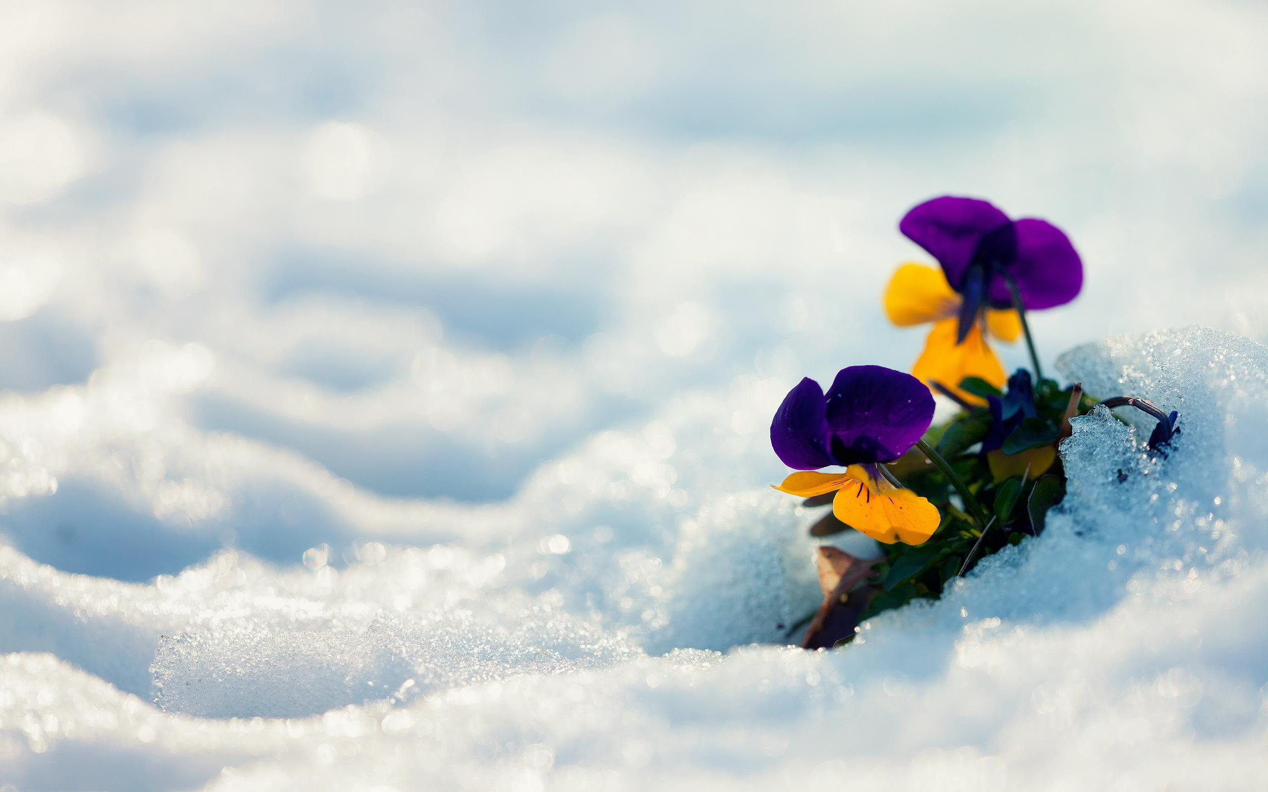 Цветы зимой картинки, картинки днем рождения