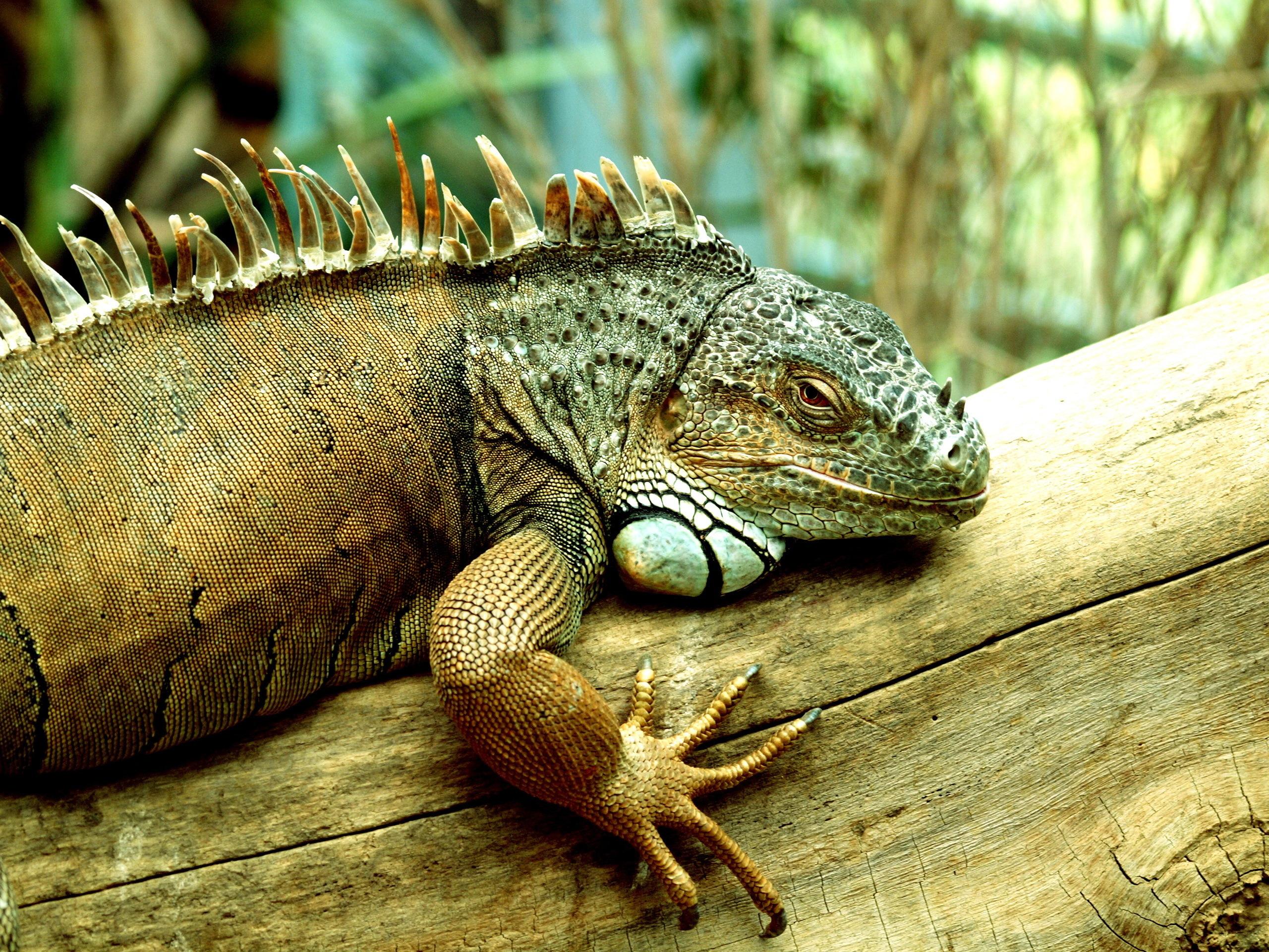 природа животные рептилия  № 234931  скачать