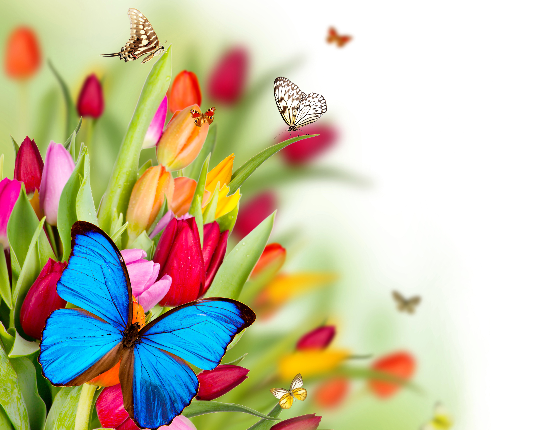 Обои мотылек, цветы, Коллаж. Разное foto 13