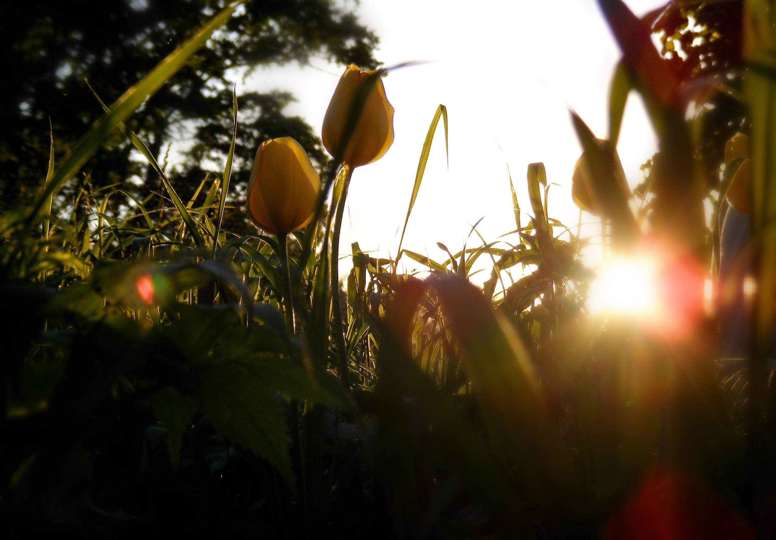 цветы солнце блики  № 1247152 загрузить