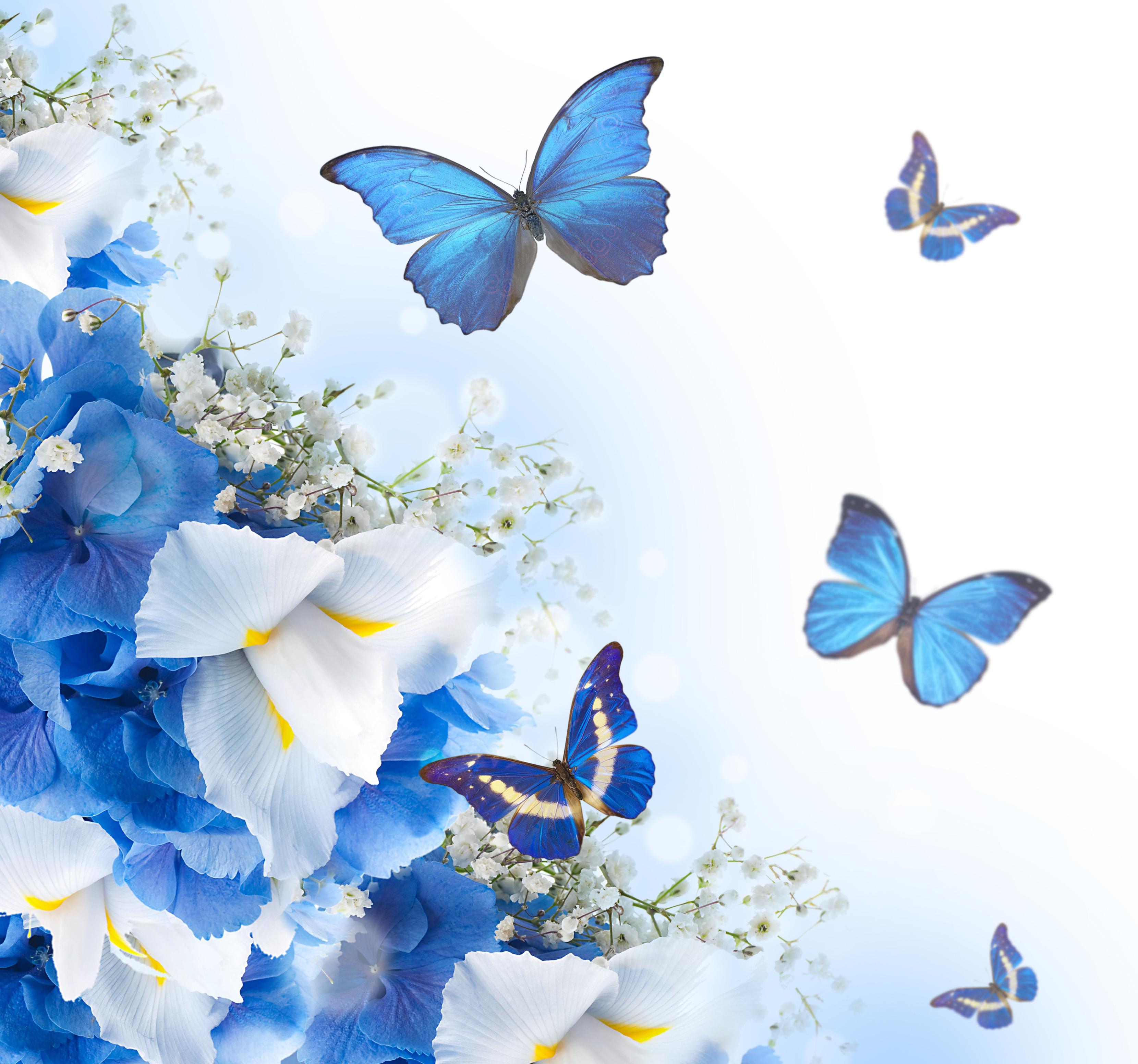 Поздравлениями, бабочки в открытки