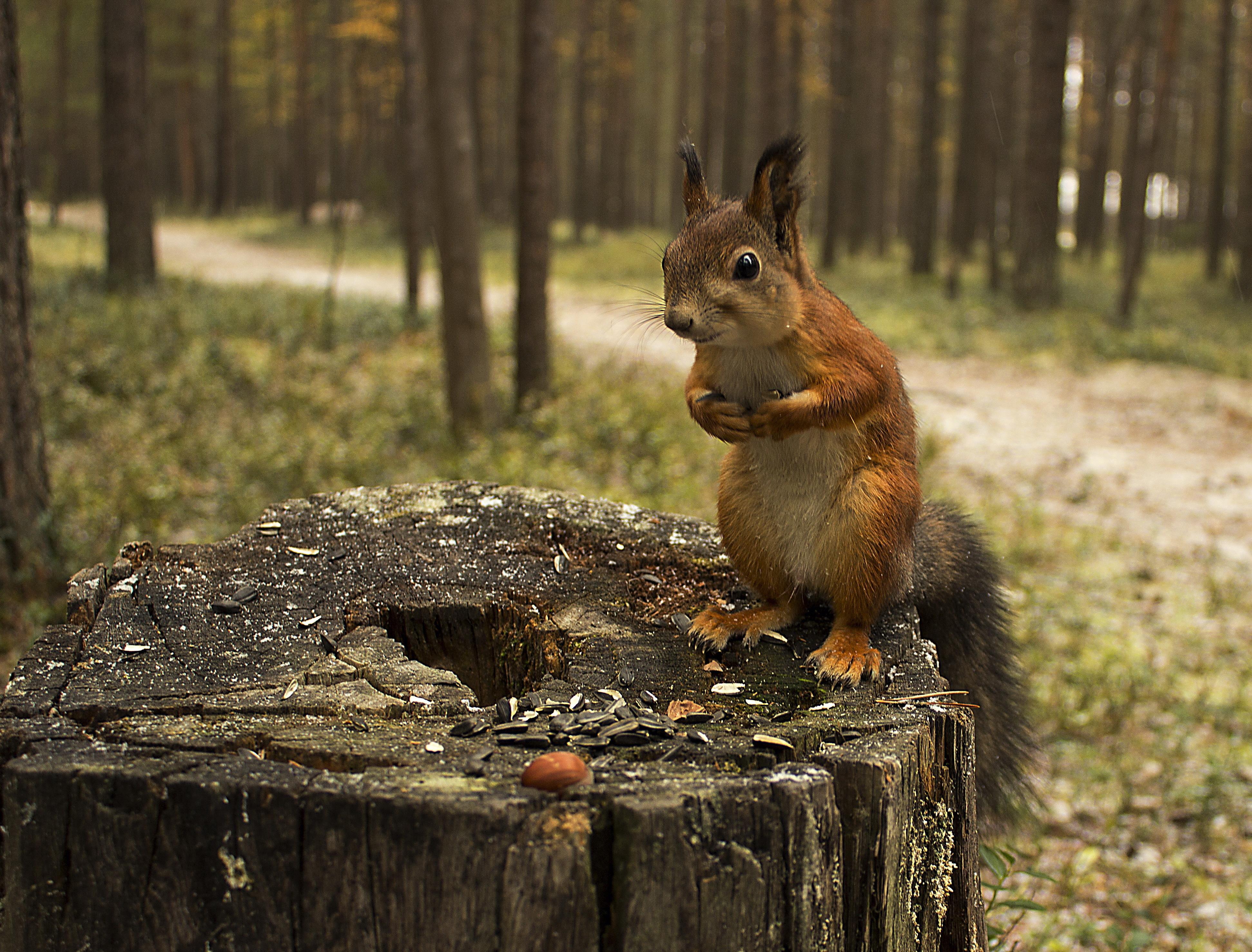 Картинки бельчата в лесу, смешные для