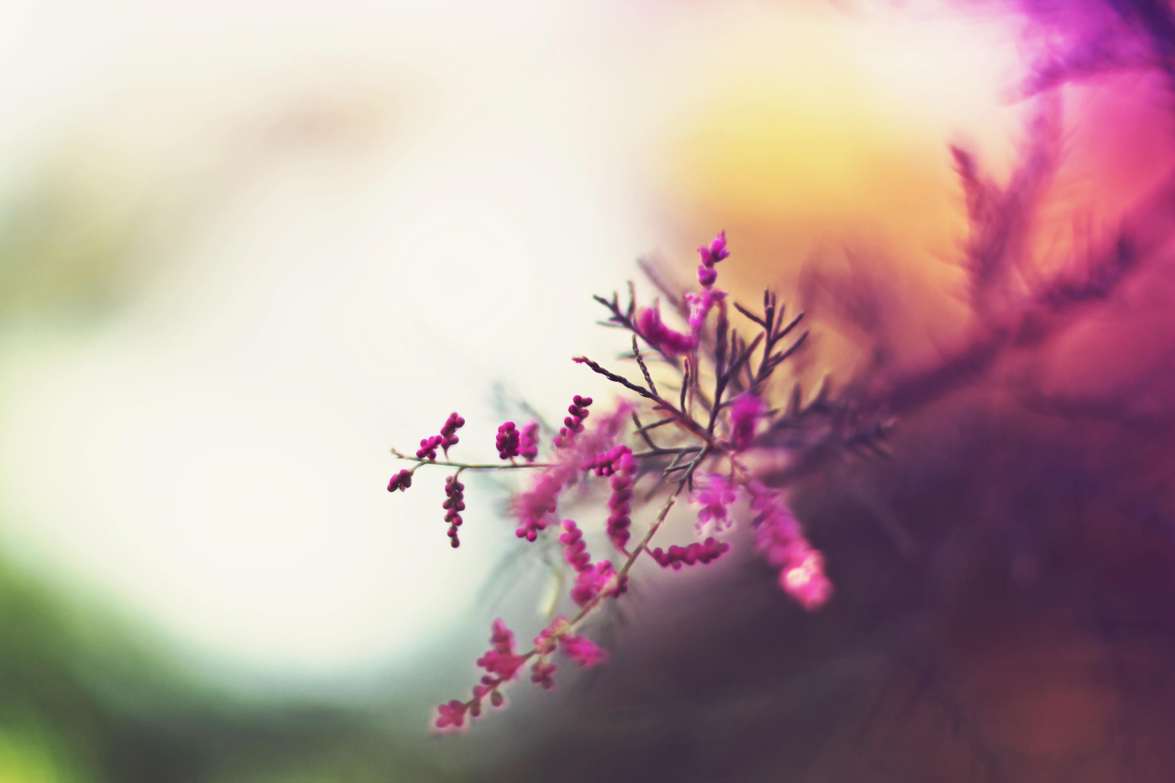 цветок, макро, розовый, природа, растения  № 695981 бесплатно