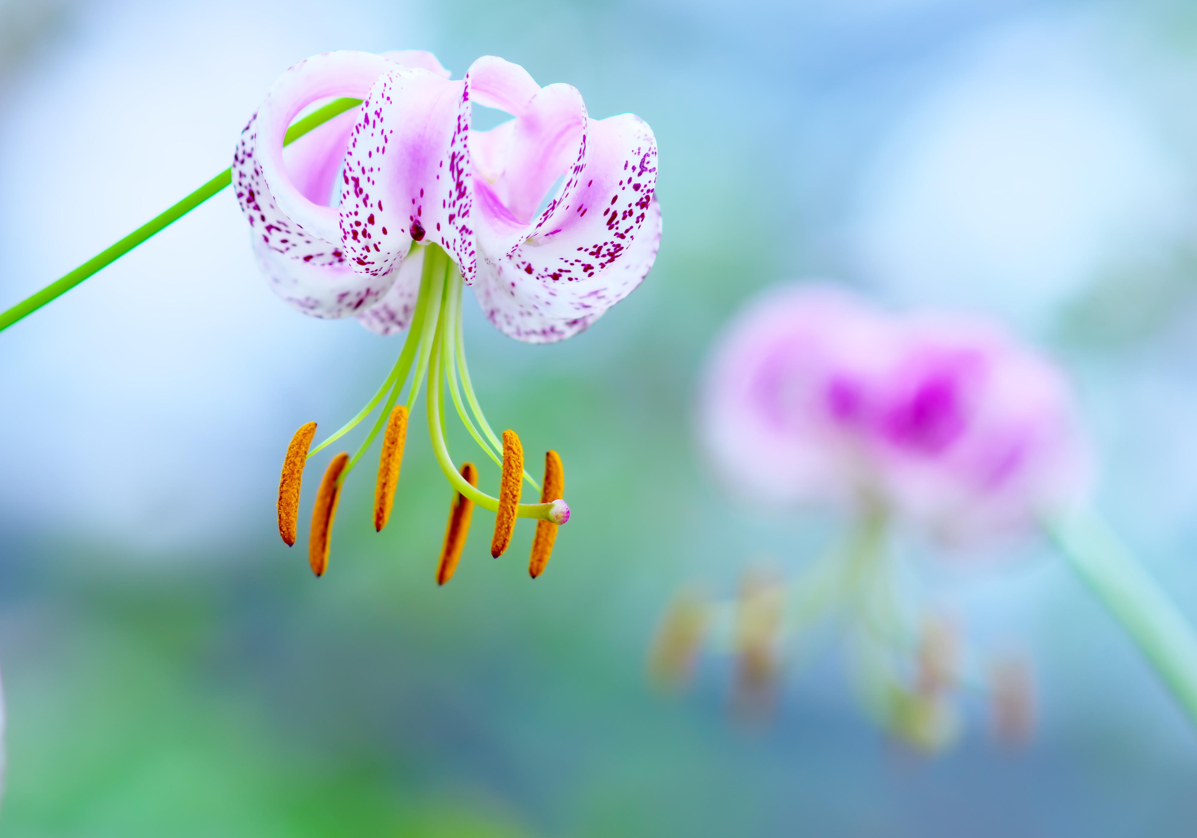 макро цветок пестик  № 3231574 загрузить