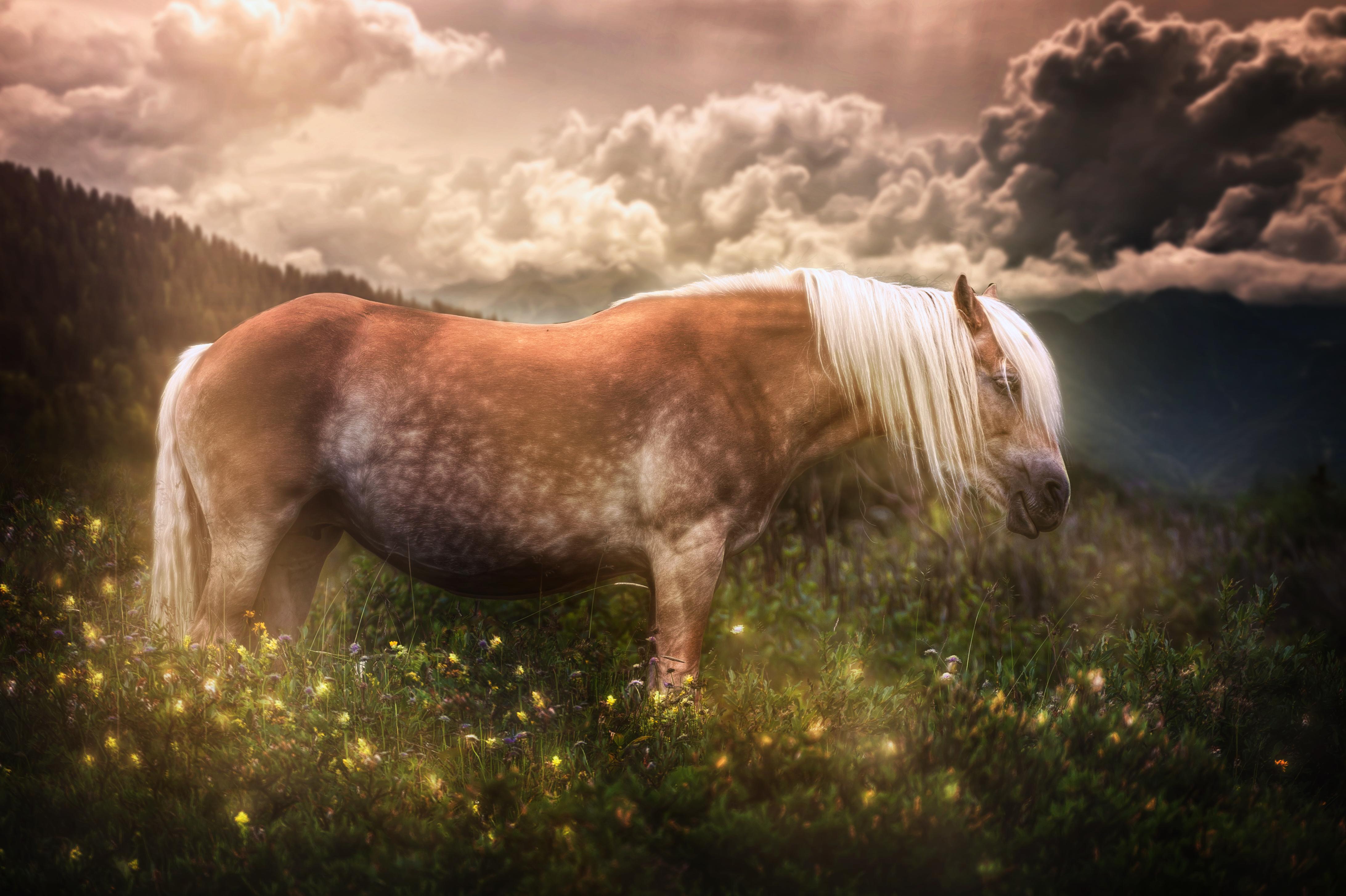 Лошадь в цветах  № 3117251 загрузить