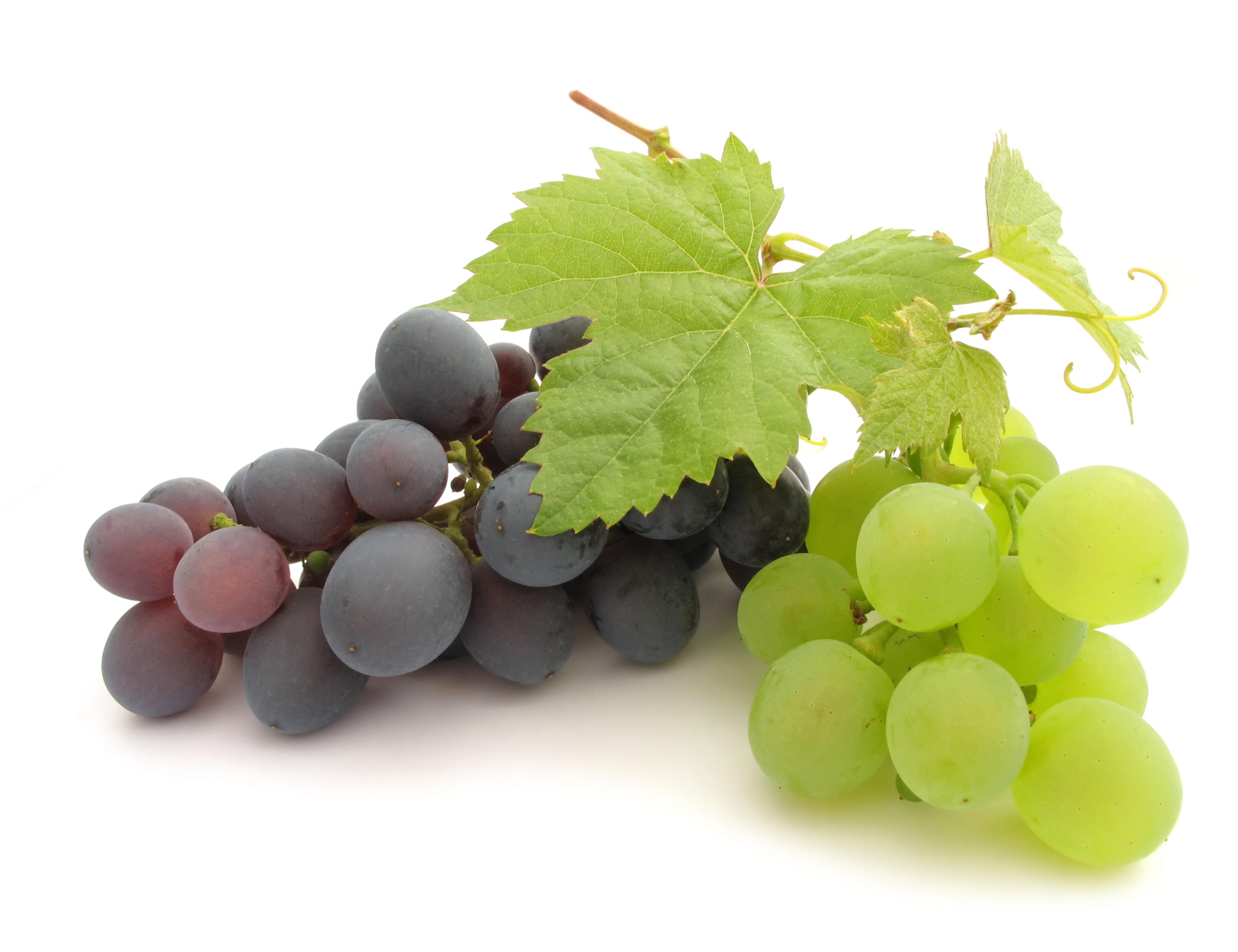 Маша, картинки про виноград