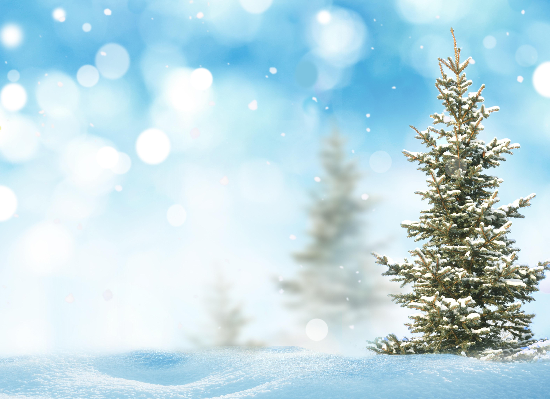 Ели в снегу снег зима  № 2793513  скачать