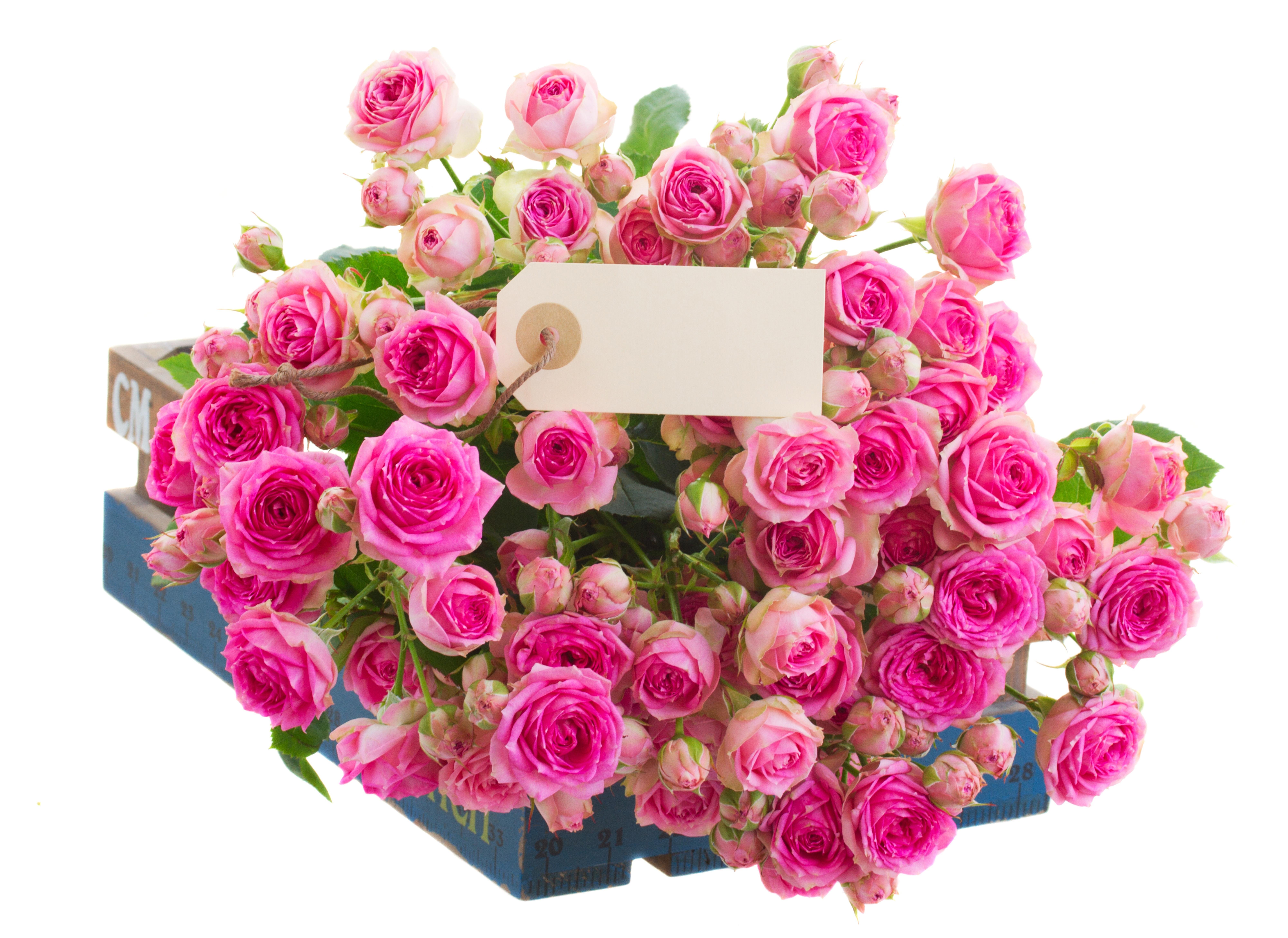 Открытки с цветами розовые розы, днем рождения