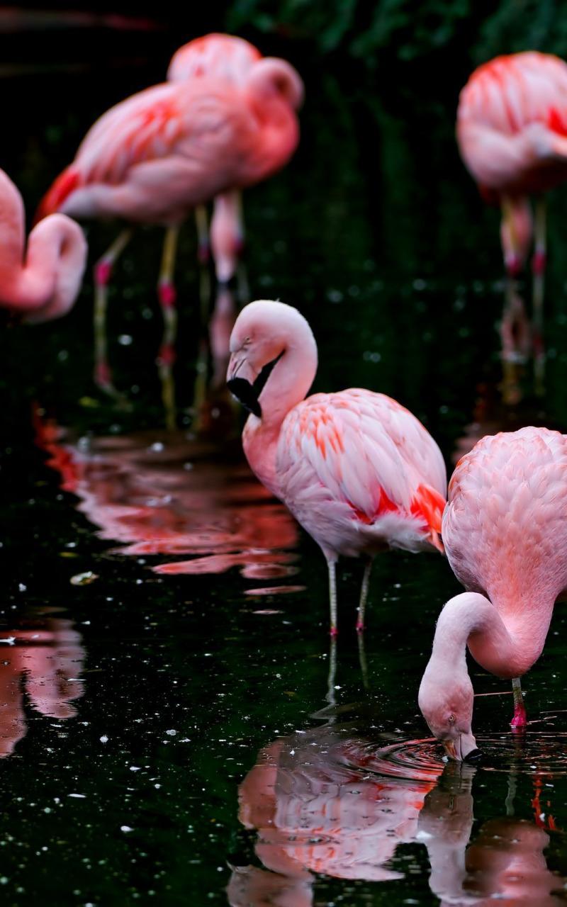 картинки для телефона фламинго себе белый
