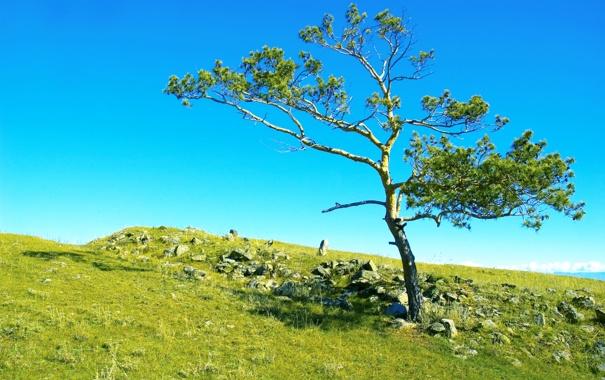 Фото обои поле, небо, трава, камни, дерево, Россия, Сибирь
