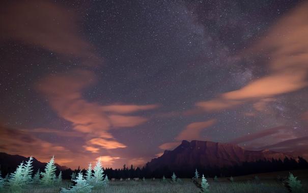 Фото обои небо, звезды, свет, деревья, горы, ночь
