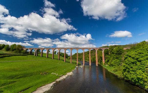 Фото обои мост, Шотландия, луг, виадук, Scotland, River Tweed, река Твид