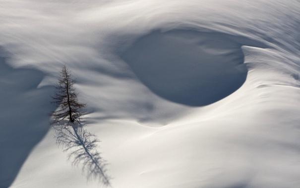 Фото обои зима, снег, природа, дерево, ёлка