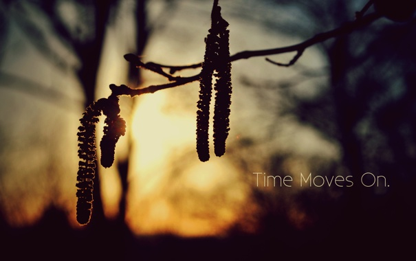 Фото обои деревья, закат, природа, надпись, ветка, time moves on