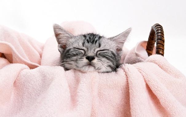 Фото обои котенок, корзина, мордочка